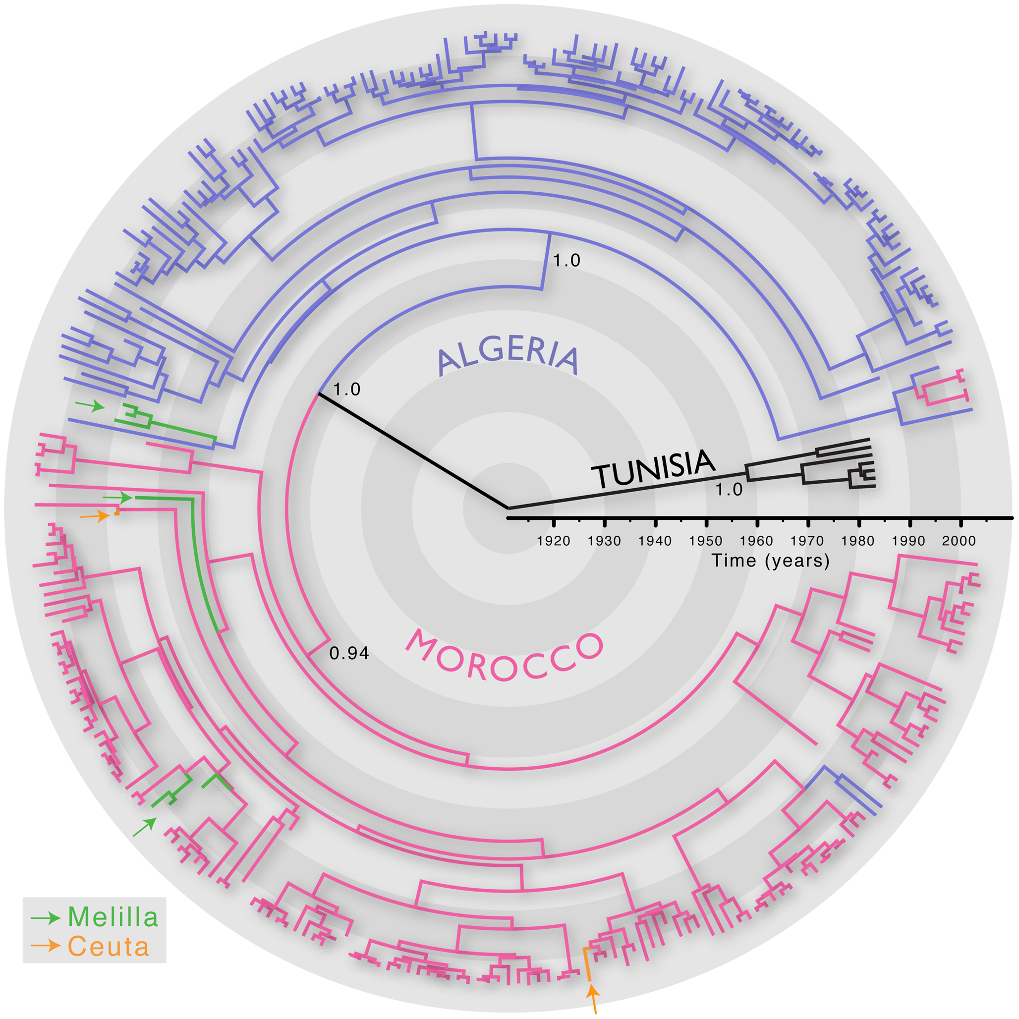 MCC tree of 287 sequences of the Africa 1 clade, estimated from the N, P and G-L genes and intergenic regions of dog RABV, and showing the spatial structure of the viral lineages.