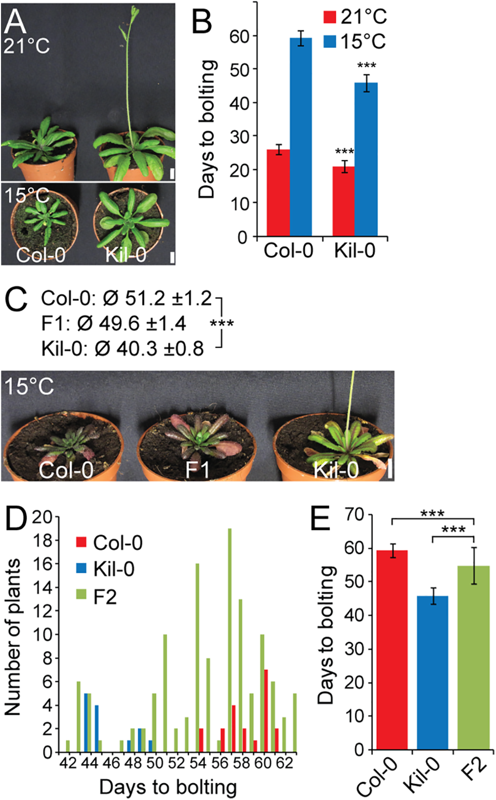 Early flowering is controlled by one major recessive locus in Kil-0.