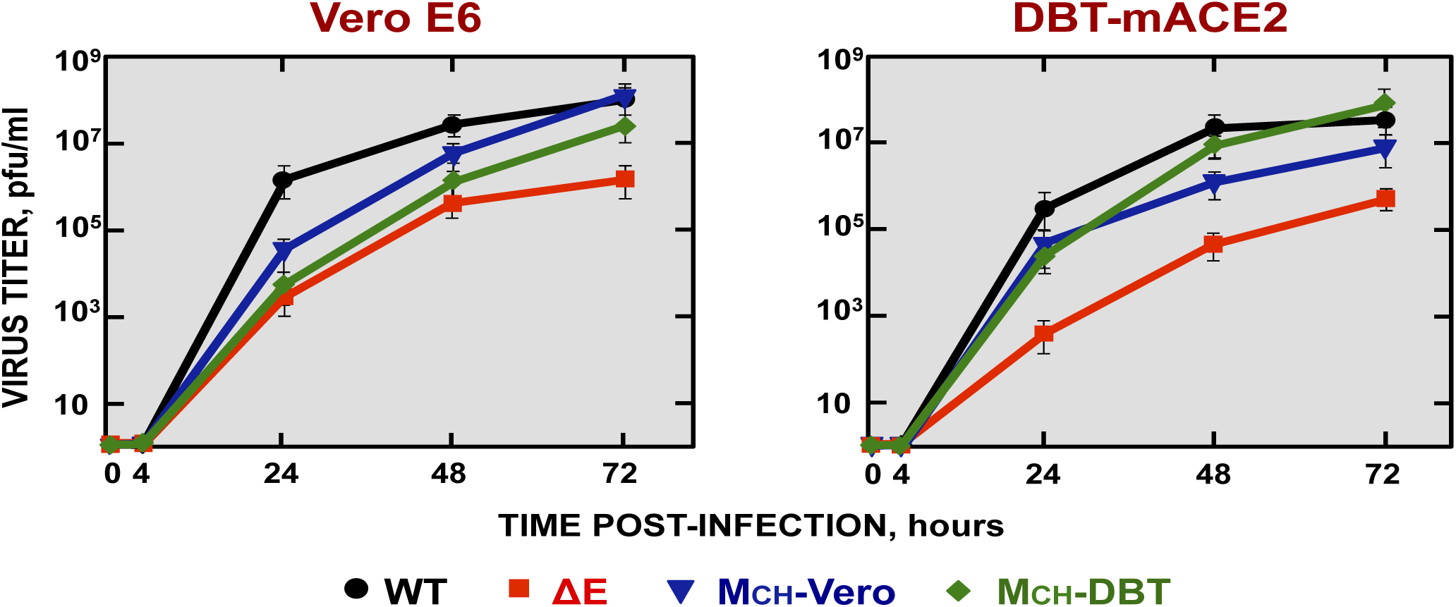 Growth kinetics of SARS-CoV-∆E viruses containing chimeric proteins.