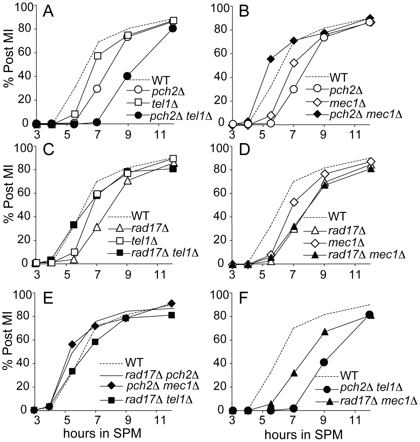 Meiotic progression analysis in single and double mutant strains.