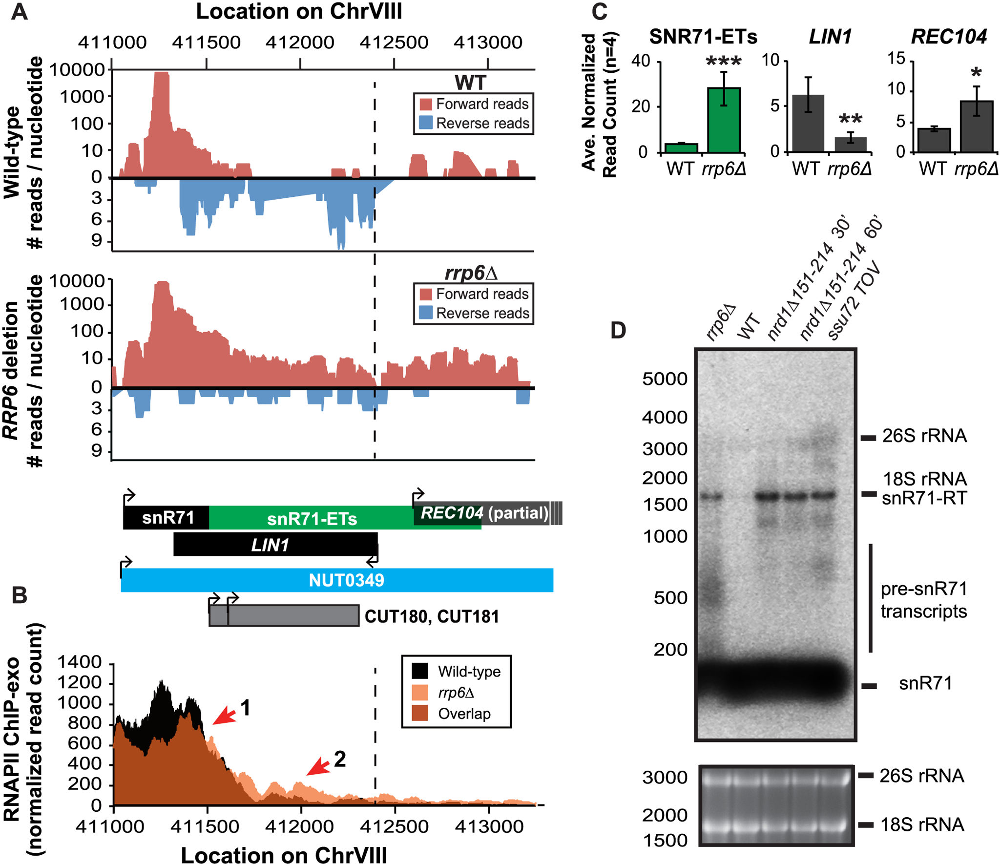 Rrp6 is required for NNS-dependent termination and RNA processing of the snR71 transcript.