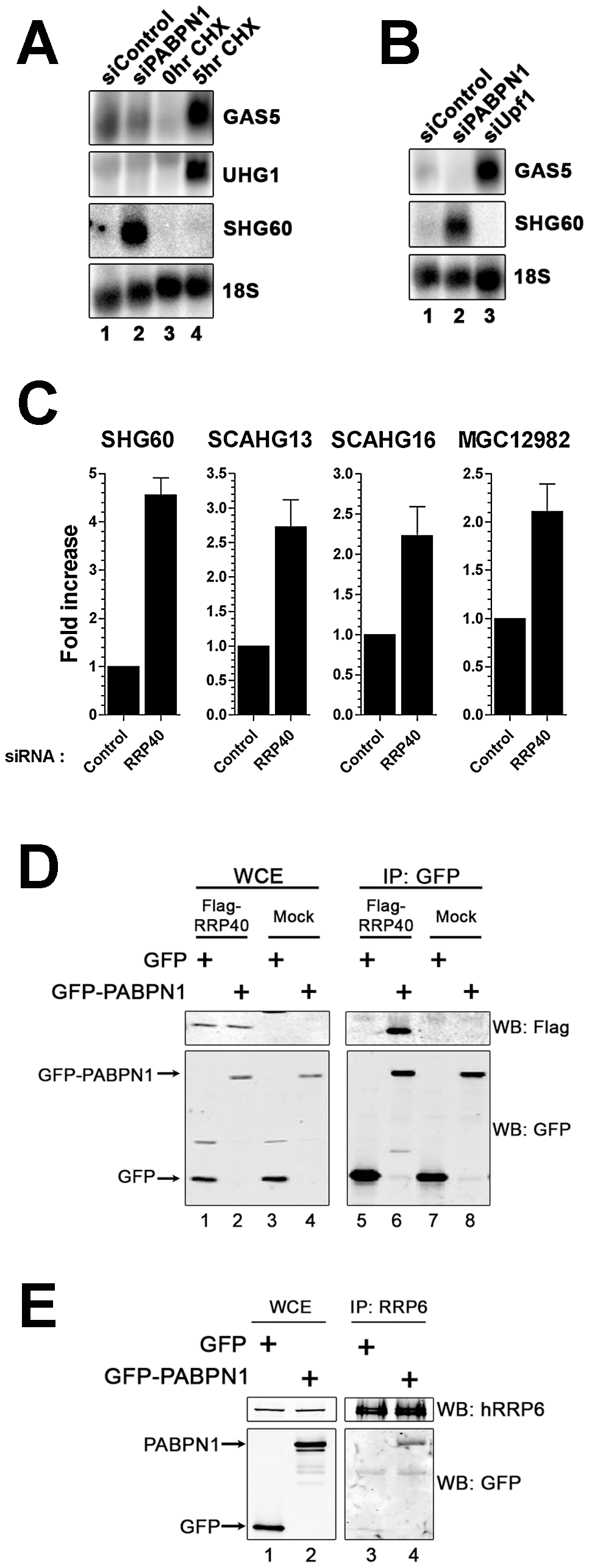 The RNA exosome, but not nonsense-mediated decay, contributes to PABPN1–dependent lncRNA decay.