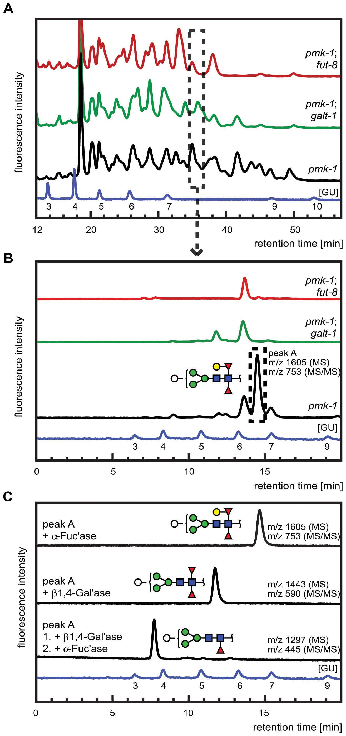 Comparative analysis of the N-glycome in CGL2-resistant <i>C. elegans</i> double mutants <i>pmk-1;fut-8(op498)</i> (red trace) and <i>pmk-1(km25);M03F8.4(op497)</i> (green trace) and the isogenic CGL2-hypersensitive single mutant strain <i>pmk-1(km25)</i> (black trace).