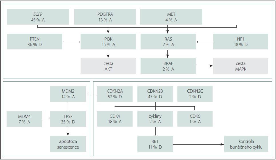 Schéma 2. Postižení signálních cest p53, RB1 a PI3K/MAPK u glioblastoma multiforme. Převzato z [28].