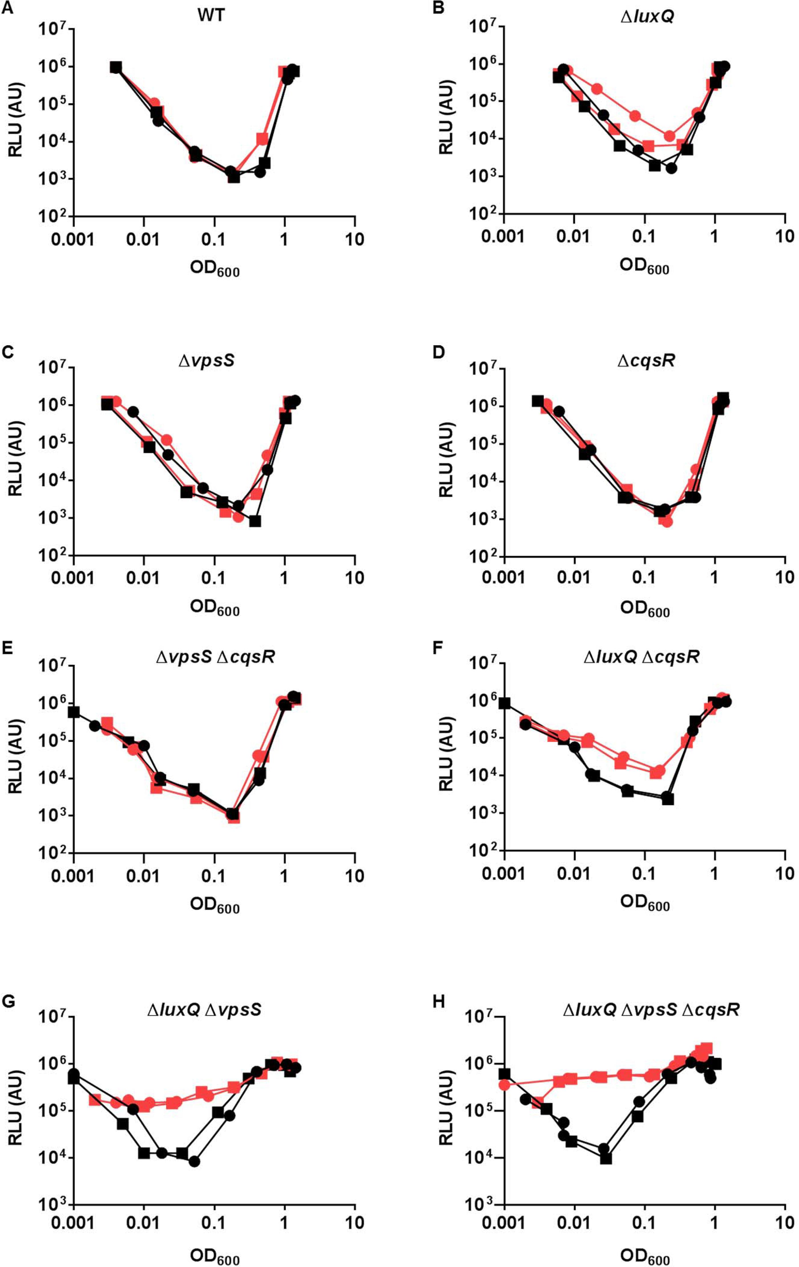 Multiple sensory inputs maintain <i>V</i>. <i>cholerae</i> QS system robustness.