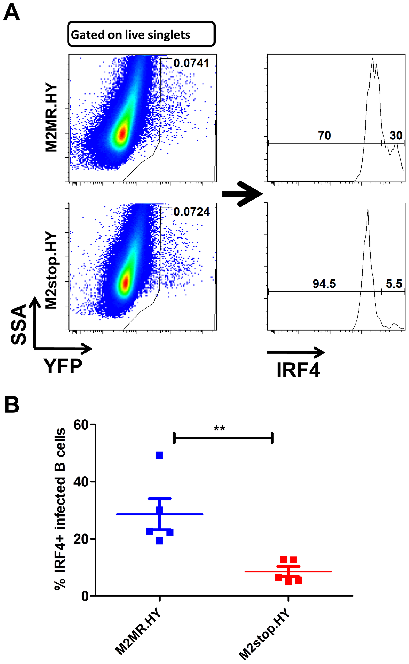 M2stop infected mice exhibit a decreased frequency of infected B cells expressing IRF4.