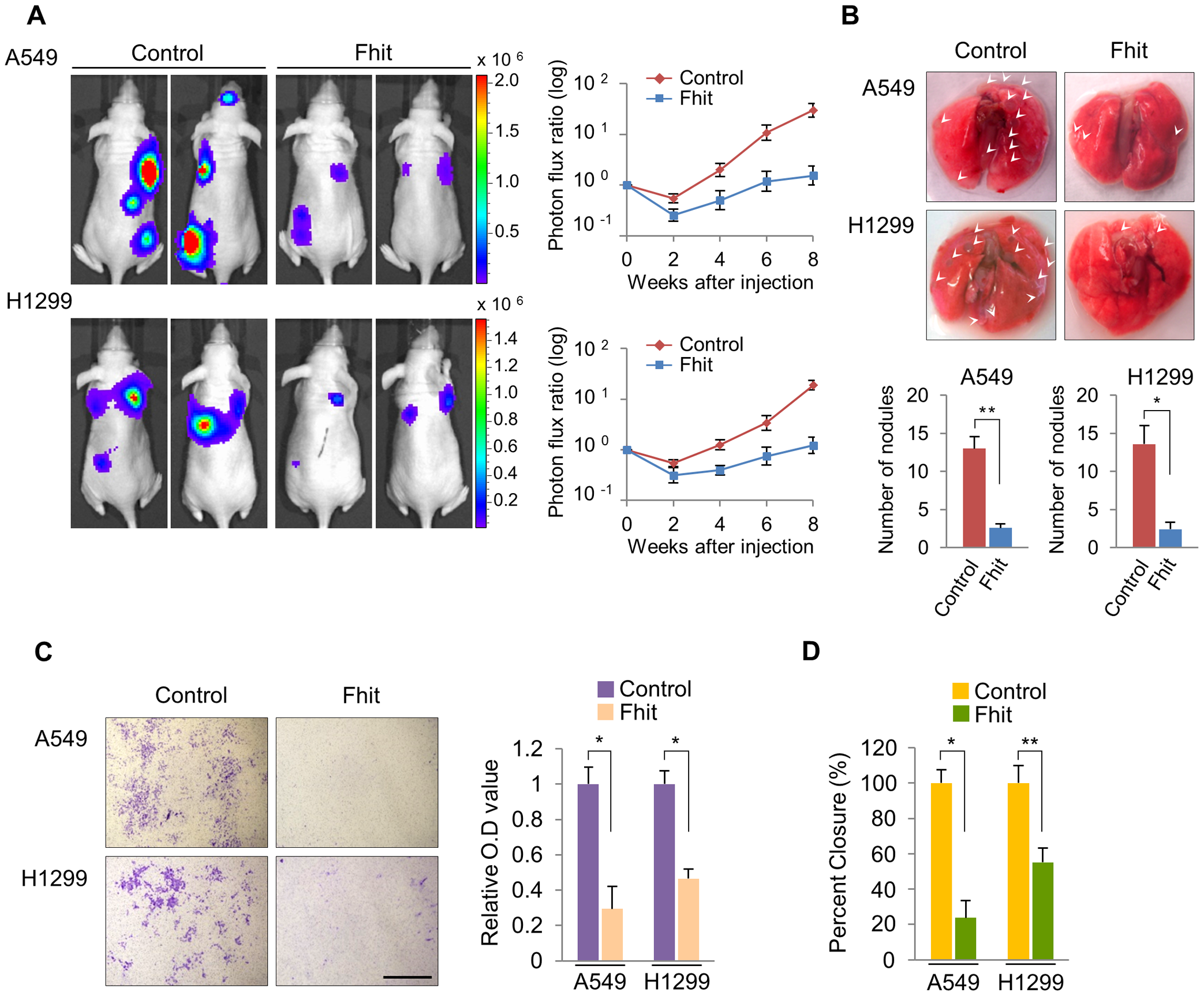 Elevated FHIT expression inhibits metastasis in human NSCLCs.