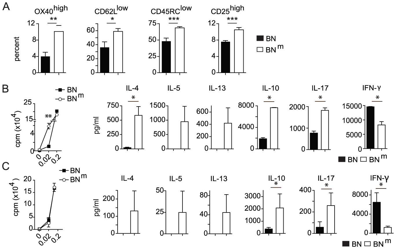 BN<sup>m</sup> rats exhibit spontaneous T cell activation and skewed cytokine production.