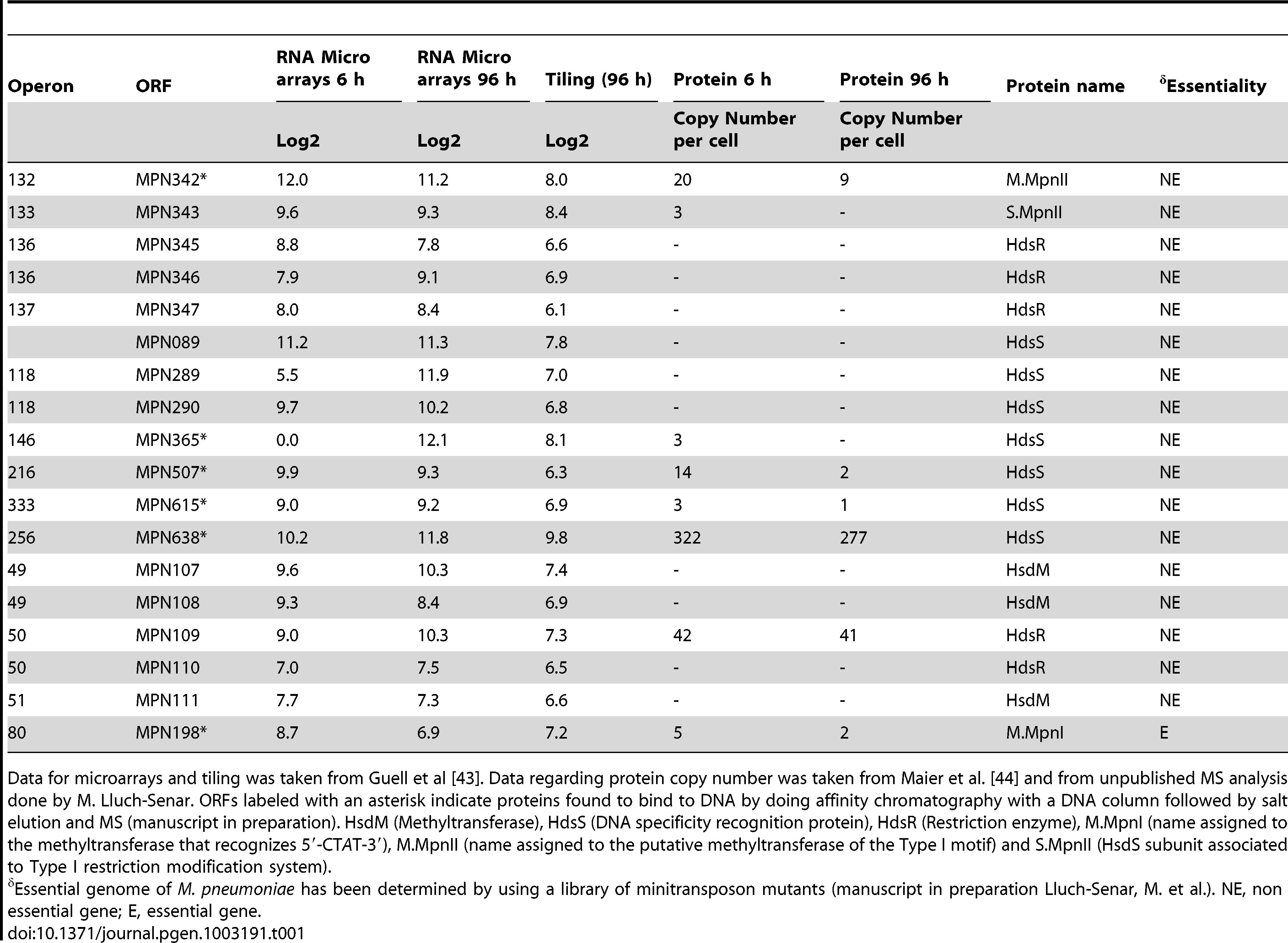 Levels of RNA and protein for different proteins of M-R systems of <i>M. pneumoniae</i>.