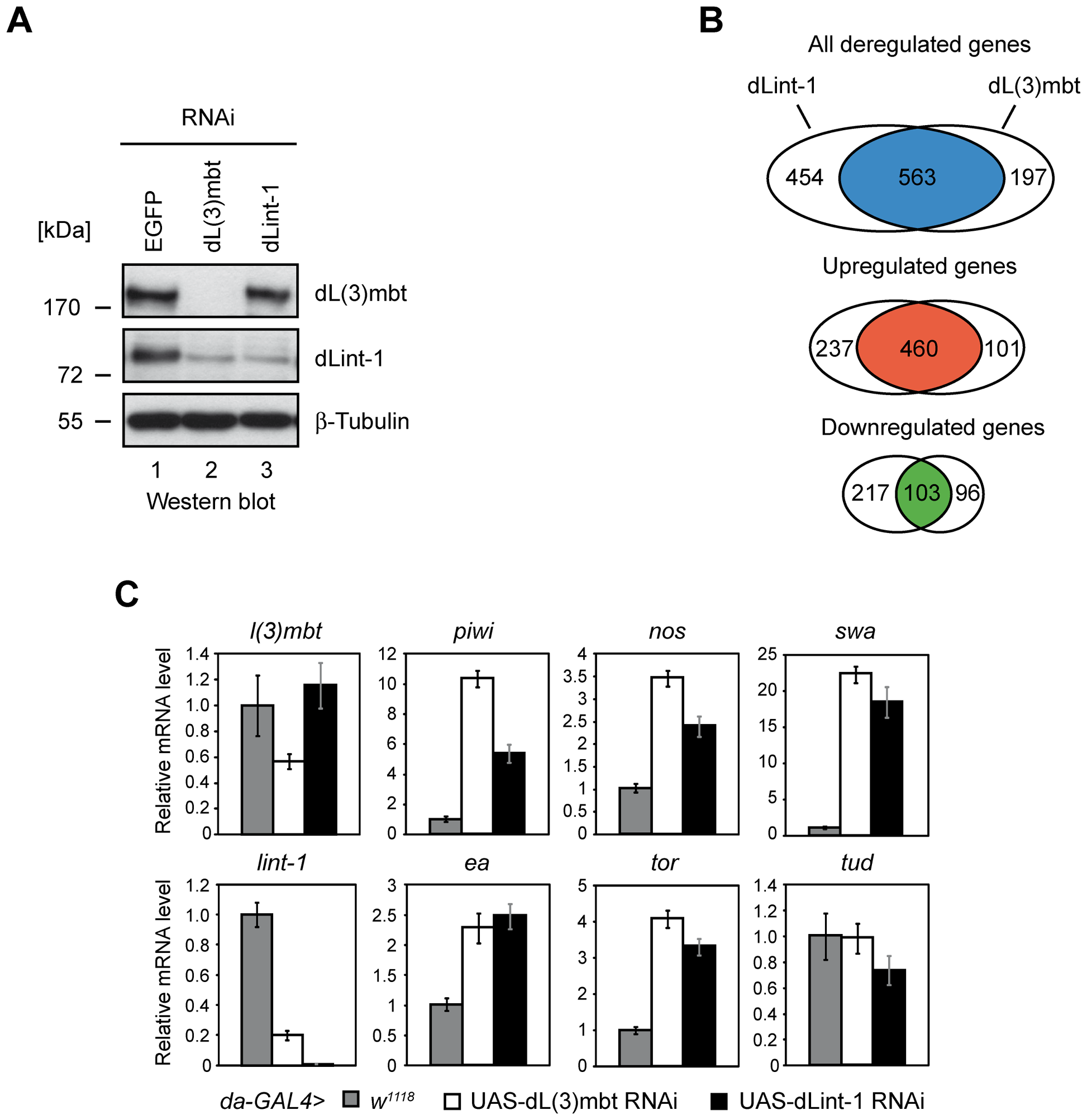 LINT represses MBTS genes with germline function.