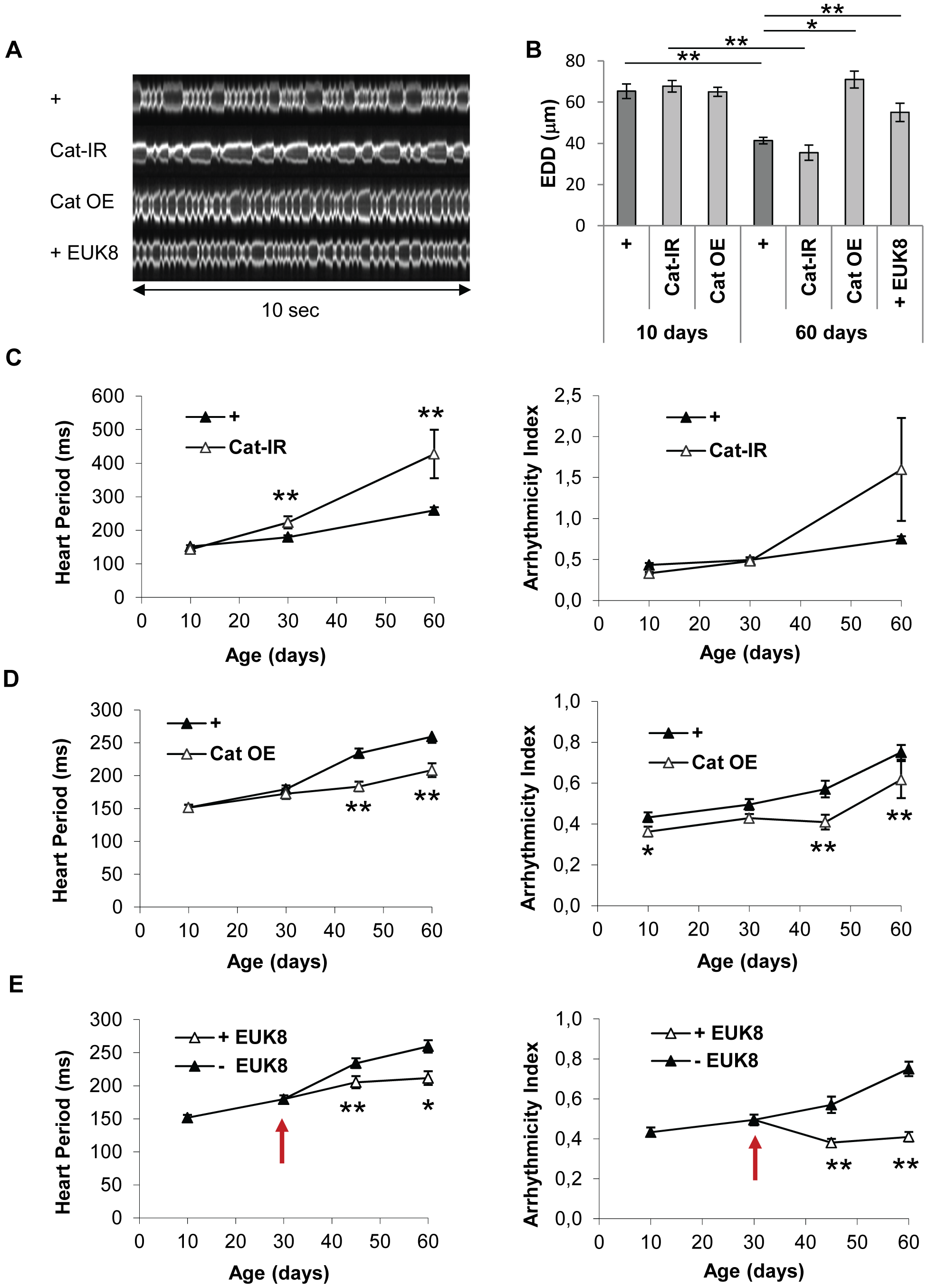 Catalase overexpression and treatment of wild-type flies with a catalase/SOD mimetic improve heart performance.