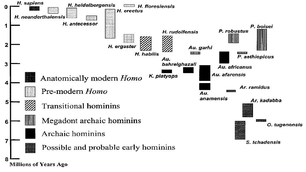 """Schéma 1. <i>Podrobná, """"rozdělující"""" taxonomie homininů (Woods, 2008)<br><br> Legenda: Anatomically modern Homo – Anatomicky moderní člověk; Pre-modern Homo – Předmoderní člověk; Transitional hominins – Přechodní homininé; Megadont archaic hominins – Megadontičtí archaičtí hominini; Archaic hominins – Archaičtí hominini; Possible a probable early hominins – Možní a pravděpodobní ranní hominini; Millions of years ago – Časová stupnice v milionech let;</i>"""
