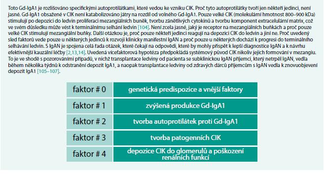 Schéma 1. U geneticky predisponovaných jedinců dochází vlivem faktorů prostředí, zřejmě zejména infekčních, k aktivaci imunitní odpovědi spojené s produkcí prozánětlivých cytokinů, na které reagují některé populace IgA1 produkujících buněk zvýšenou produkcí Gd-IgA1