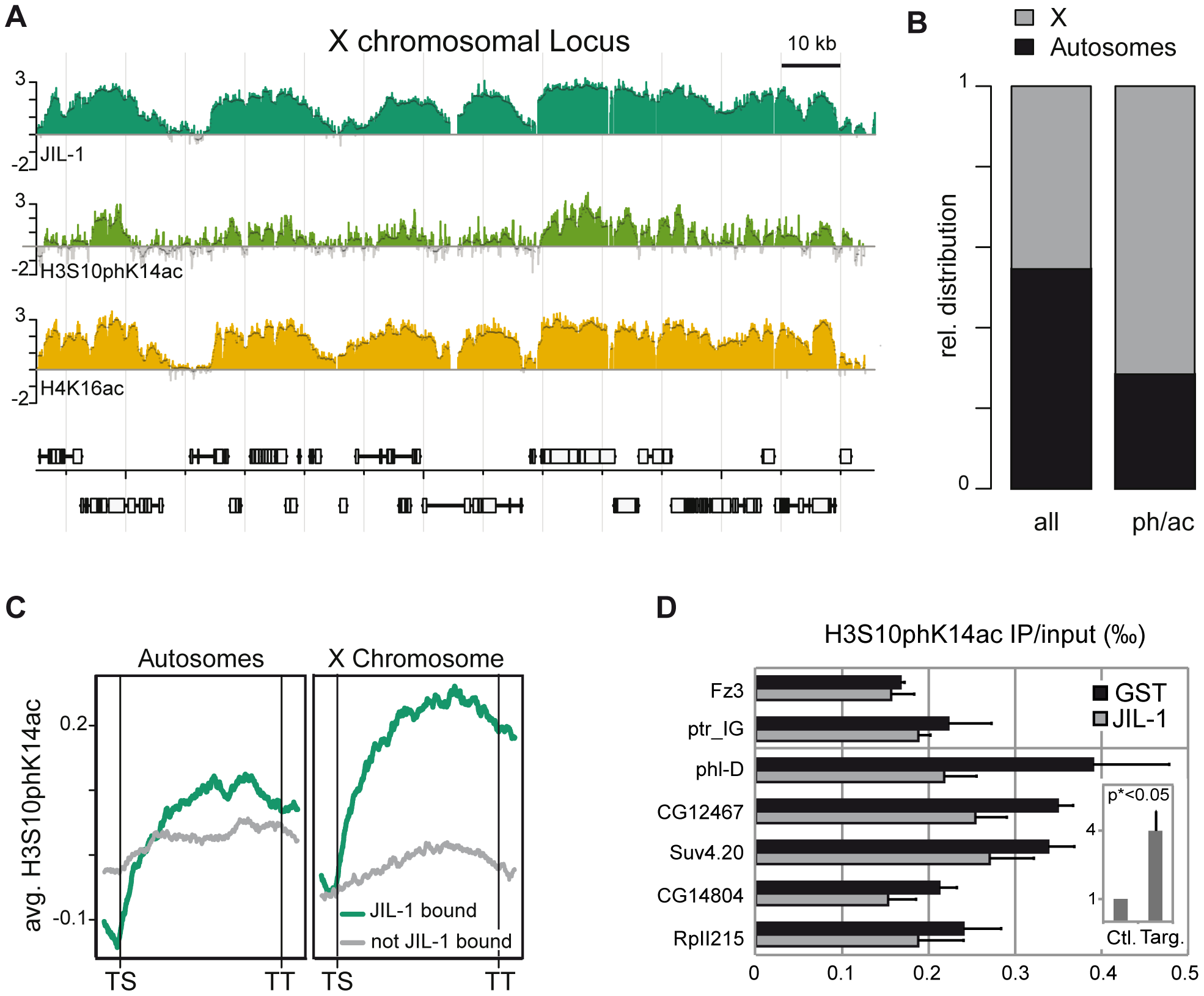 JIL-1–dependent H3S10phK14ac is enriched on the compensated X chromosome together with JIL-1.