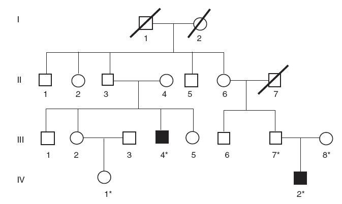 Rodokmeň nerómskej rodiny s Criglerovým-Najjarovým syndrómom typu I. (* označuje členov rodiny, od ktorých sme získali DNA vzorky)