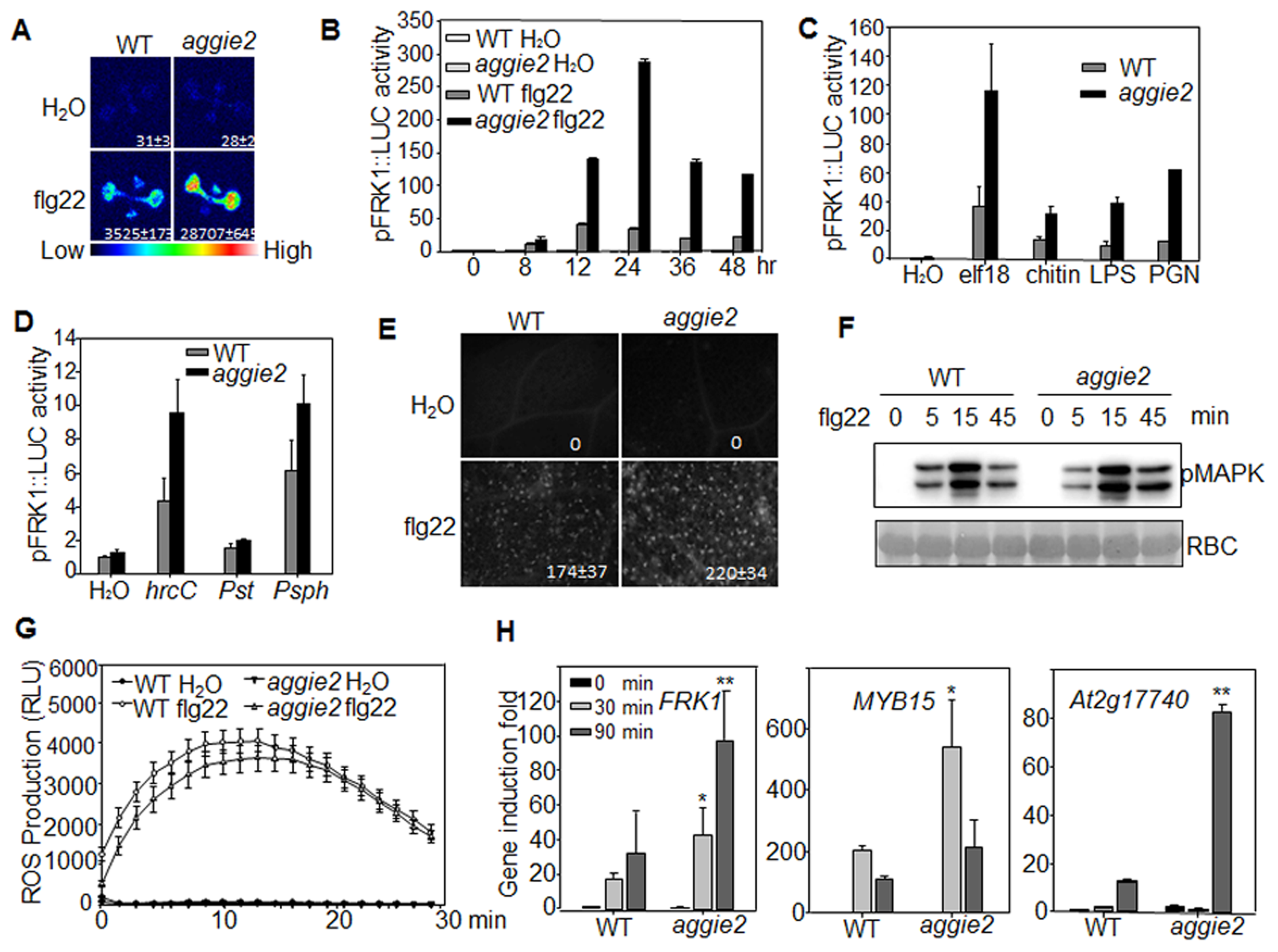 Elevated <i>pFRK1::LUC</i> expression and MAMP-triggered immune response in <i>aggie2</i> mutant.