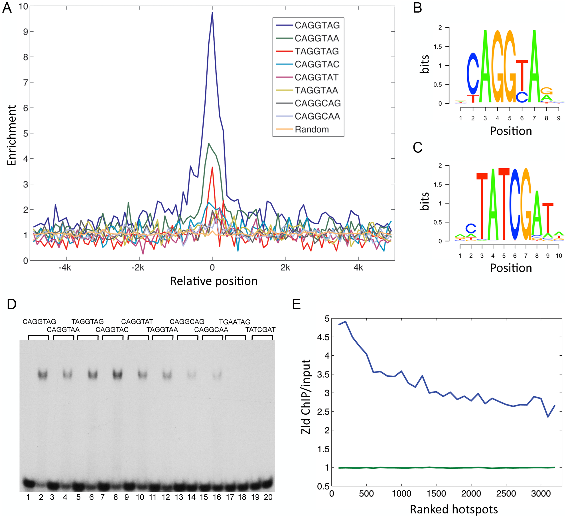 Conserved TAGteam motifs are differentially enriched in Zld-bound regions.