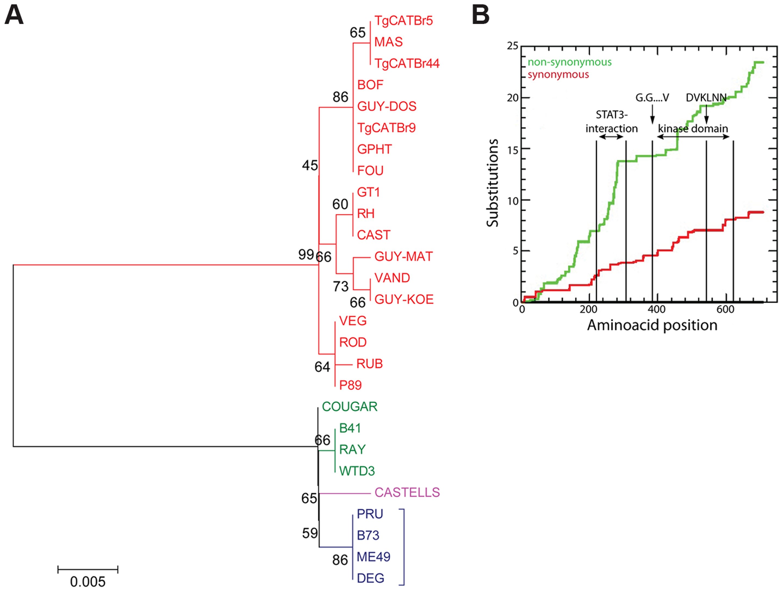 Evolutionary analysis of ROP16.