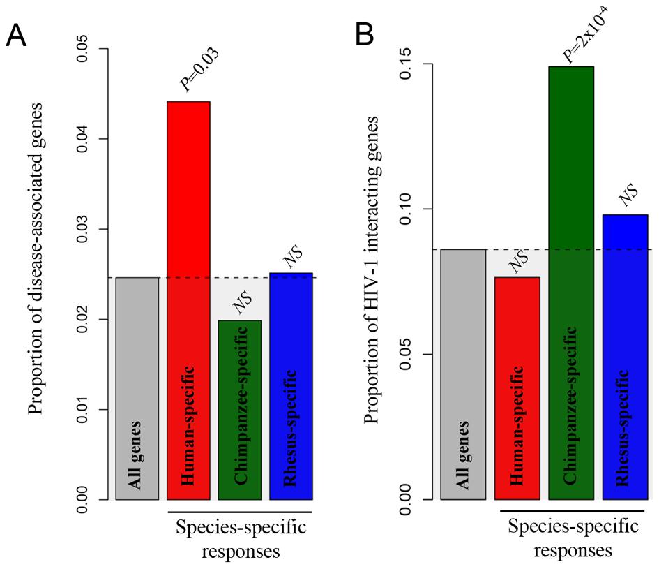 Species-specific immune responses and disease susceptibility.
