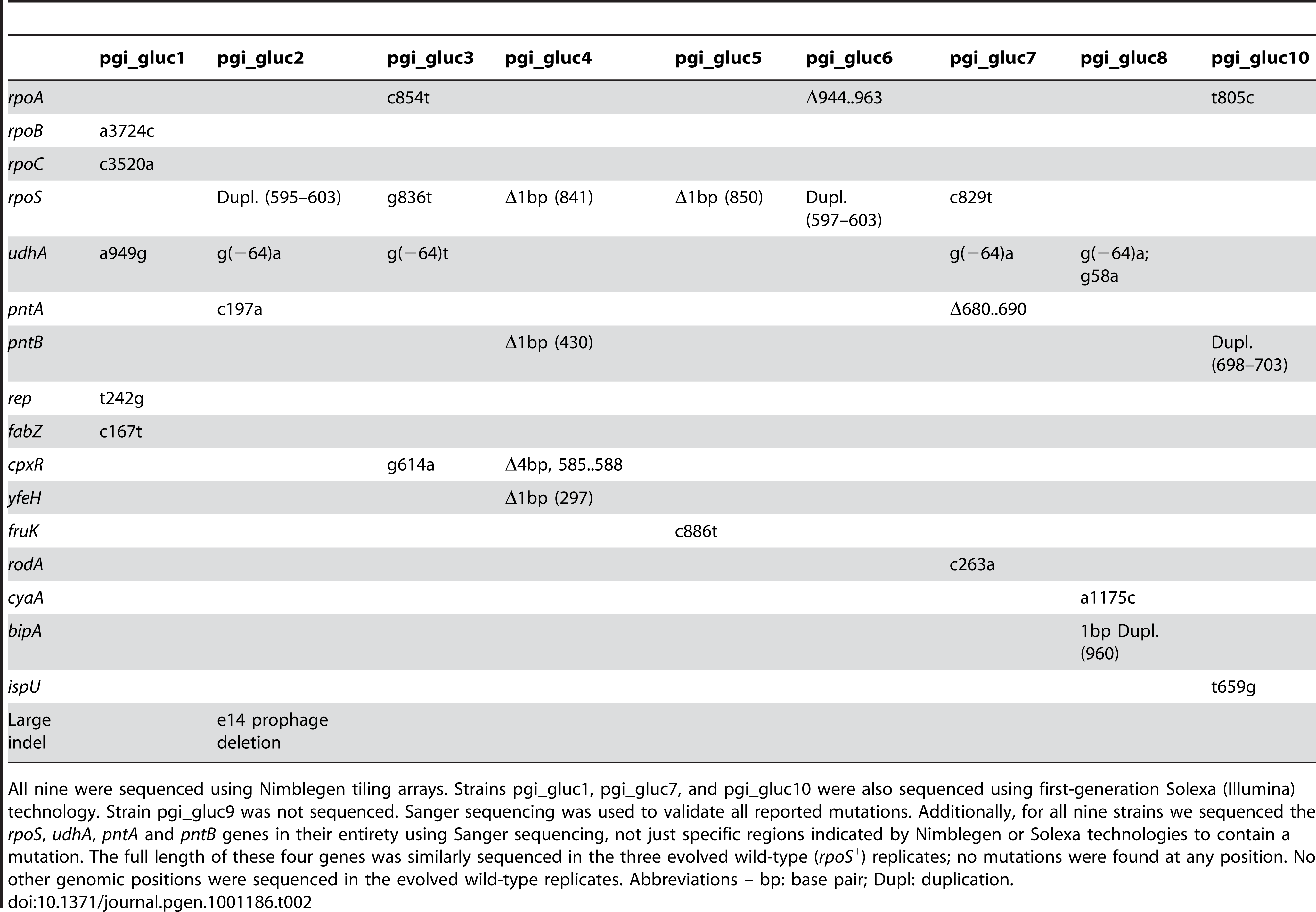 Mutations detected in clones isolated from nine of the ten evolved Δ<i>pgi</i> strains isolated after 50 days of adaptive evolution.