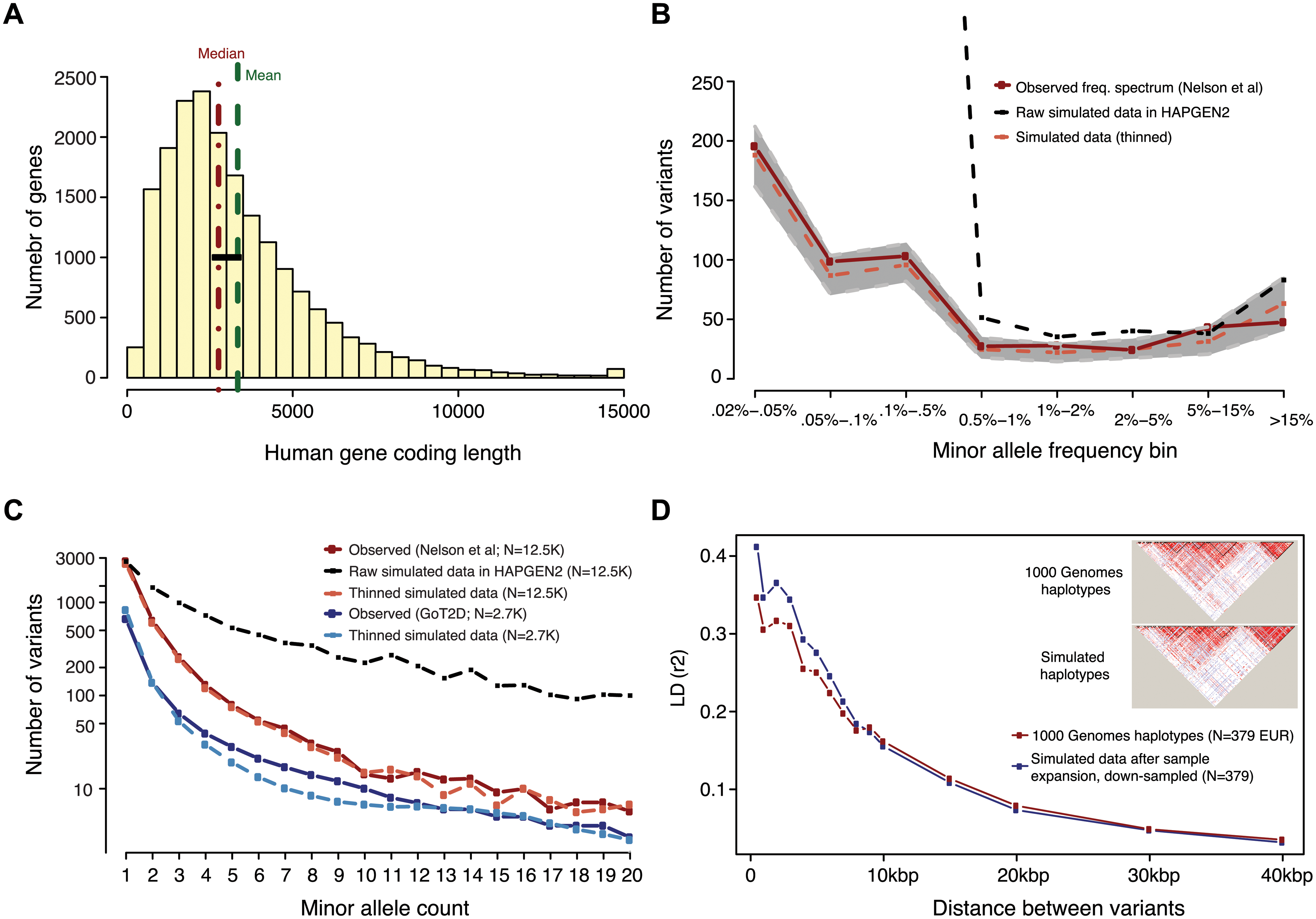 Generation of simulated genotype data at human gene loci in large sample sizes with HAPGEN2.