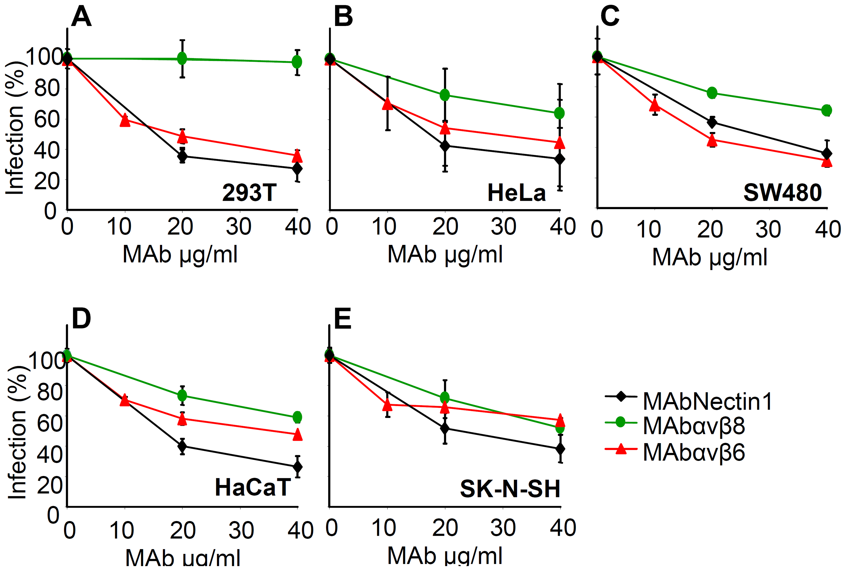 Inhibition of HSV-1 infection by function blocking MAbs to αvβ6- or αvβ8–integrin.