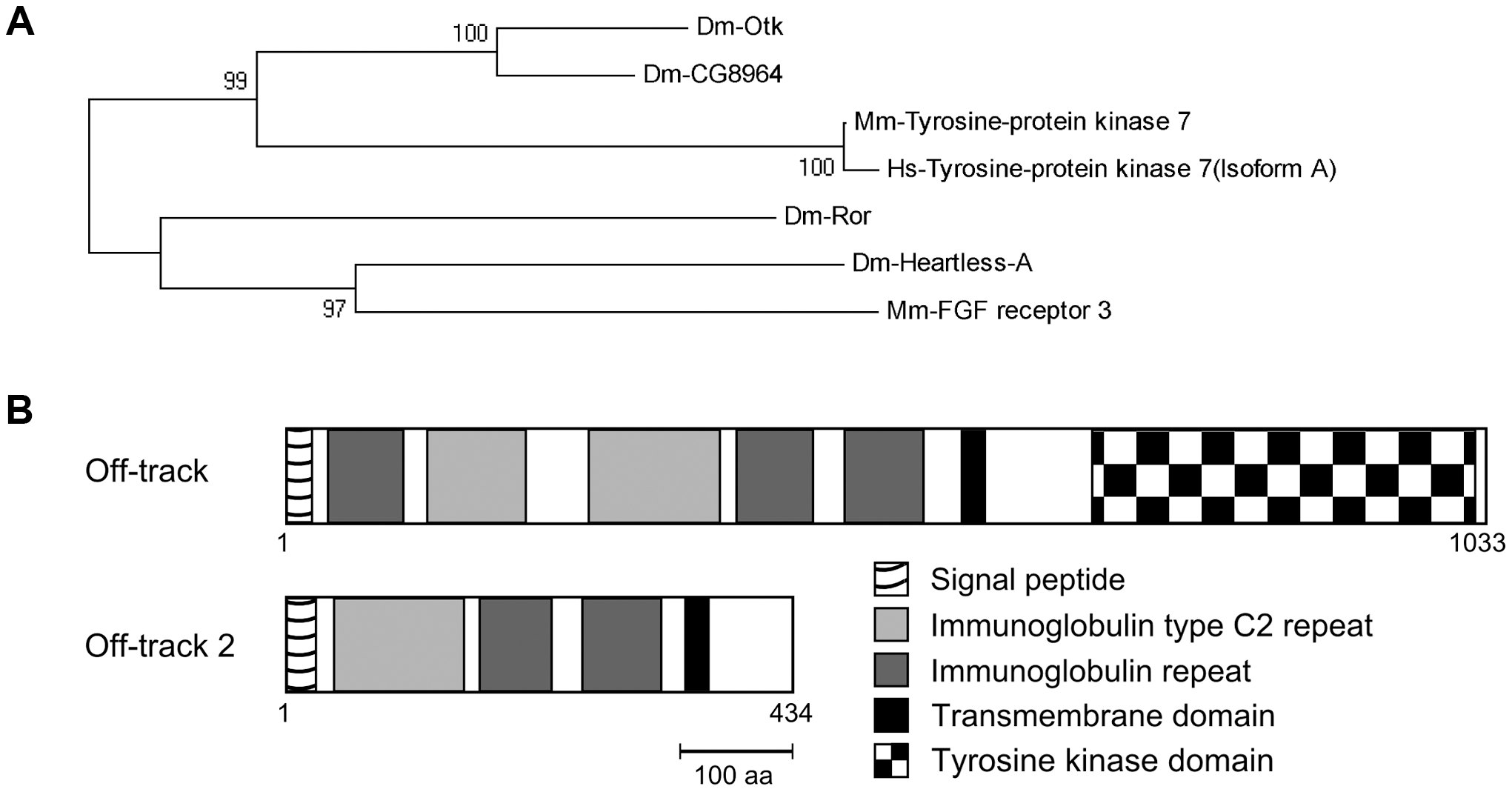 Off-track (Otk) and Off-track2 (CG8964, Otk2) are paralogs evolved by gene duplication.