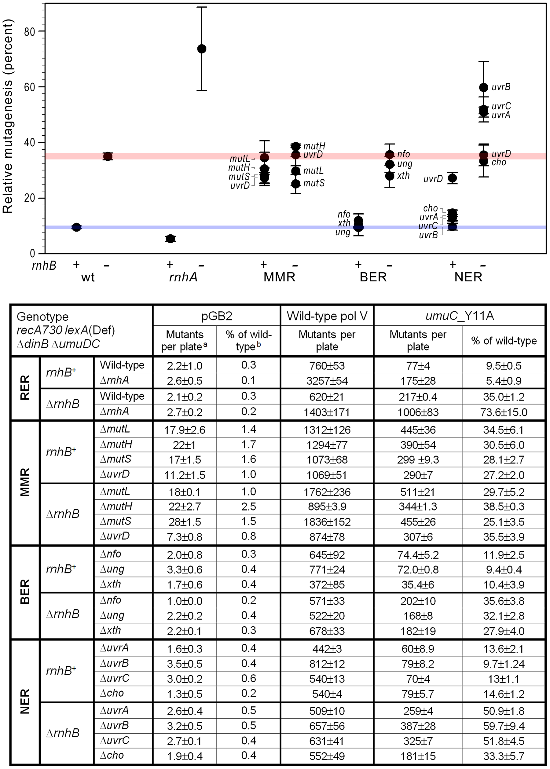 Effect of inactivating RER, MMR, BER and NER on spontaneous mutagenesis in <i>recA730 lexA</i>(Def) Δ<i>dinB</i> strains Δ<i>umuDC</i>.