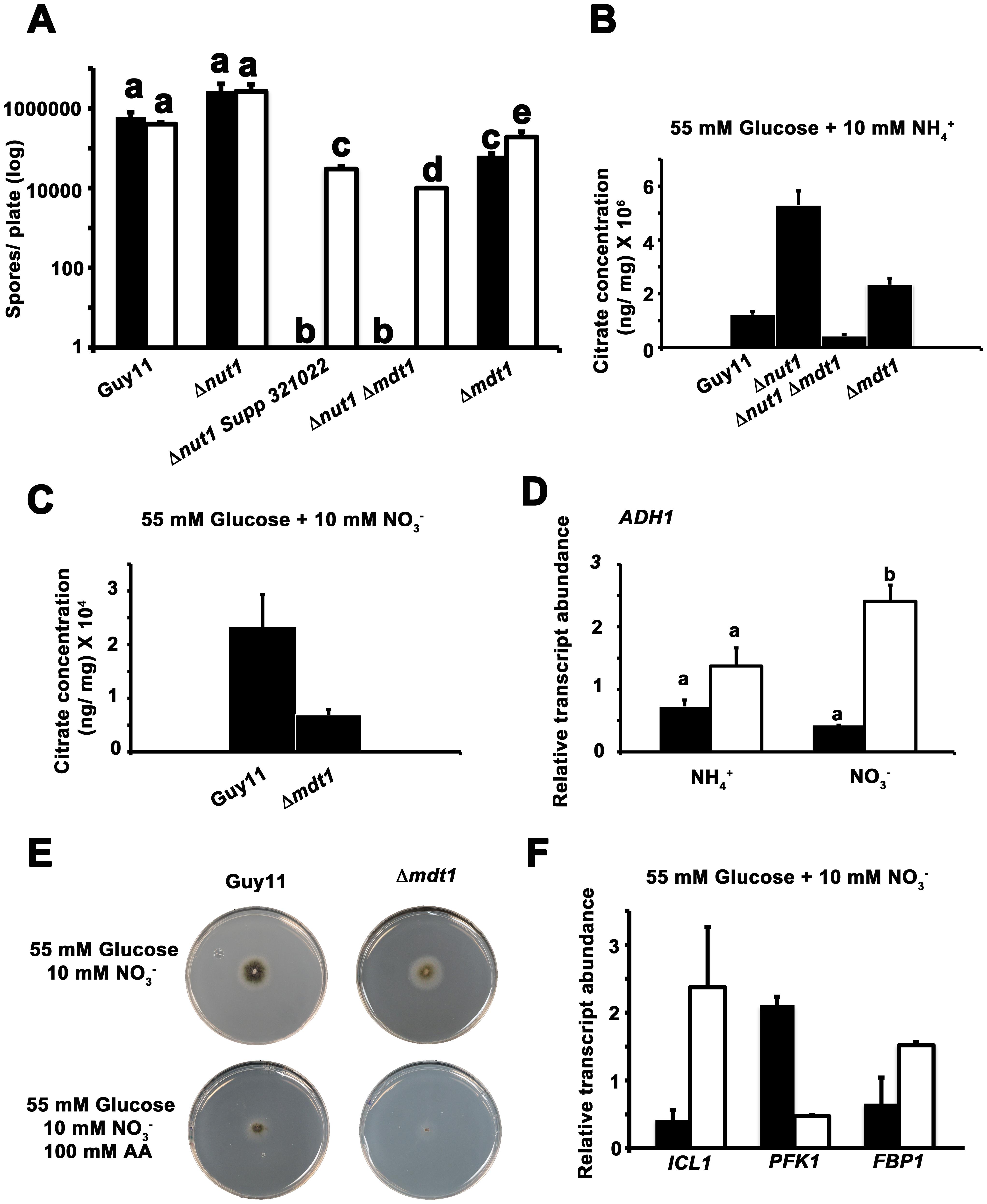 Elucidating the function of the Mdt1 efflux protein.