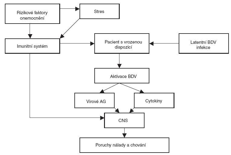 Schéma 1. Viro-psycho-imunologický model.