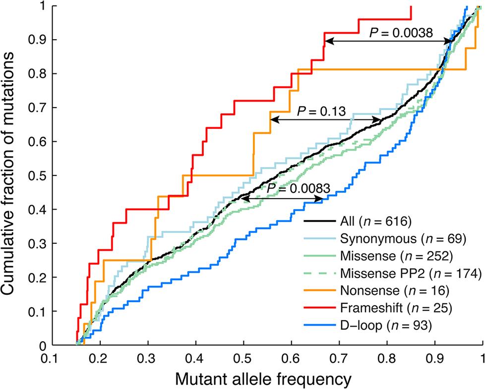 Frameshift indels show reduced heteroplasmy levels indicative of negative selection.