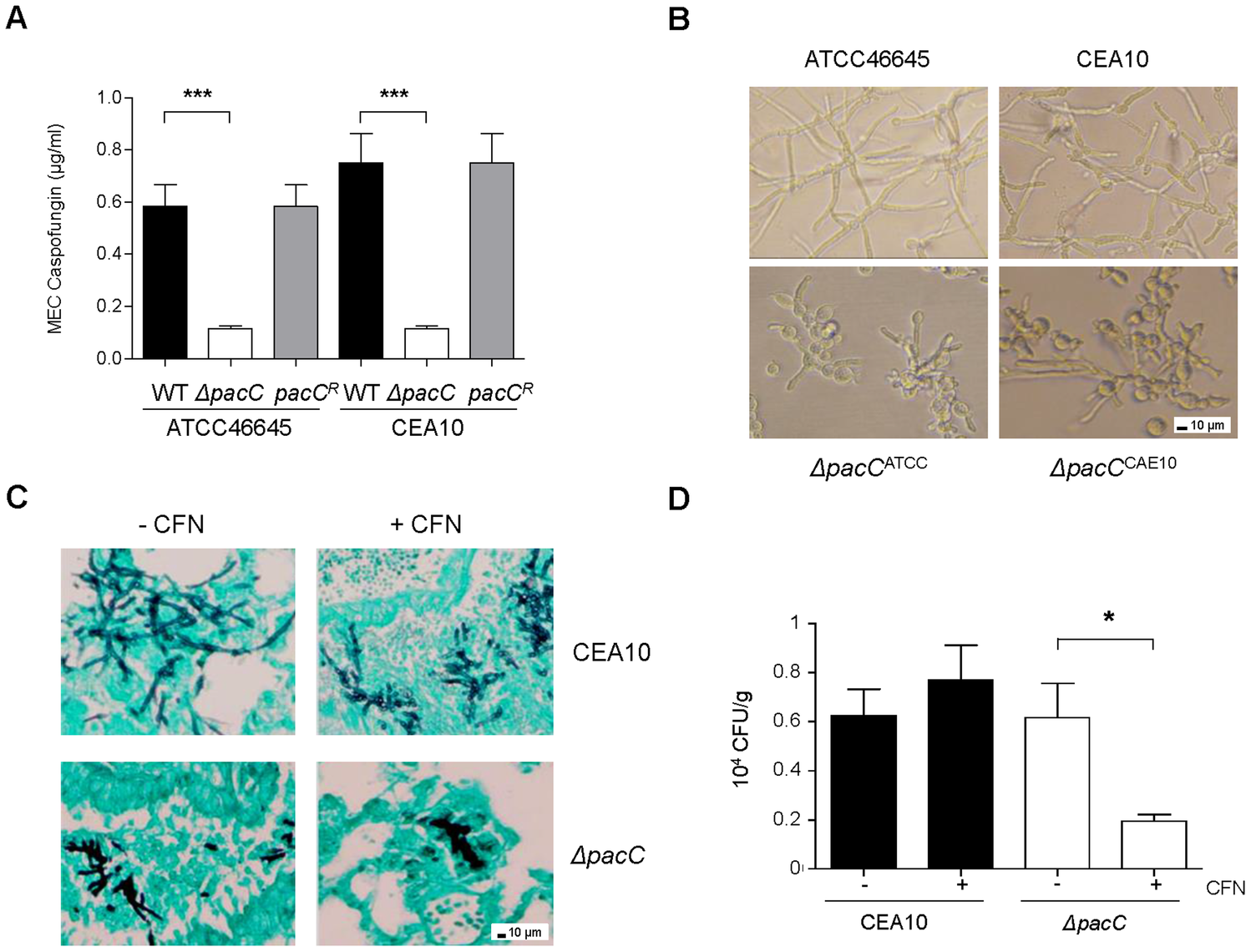 <i>ΔpacC</i> mutants are hypersensitive to cell wall active drugs.