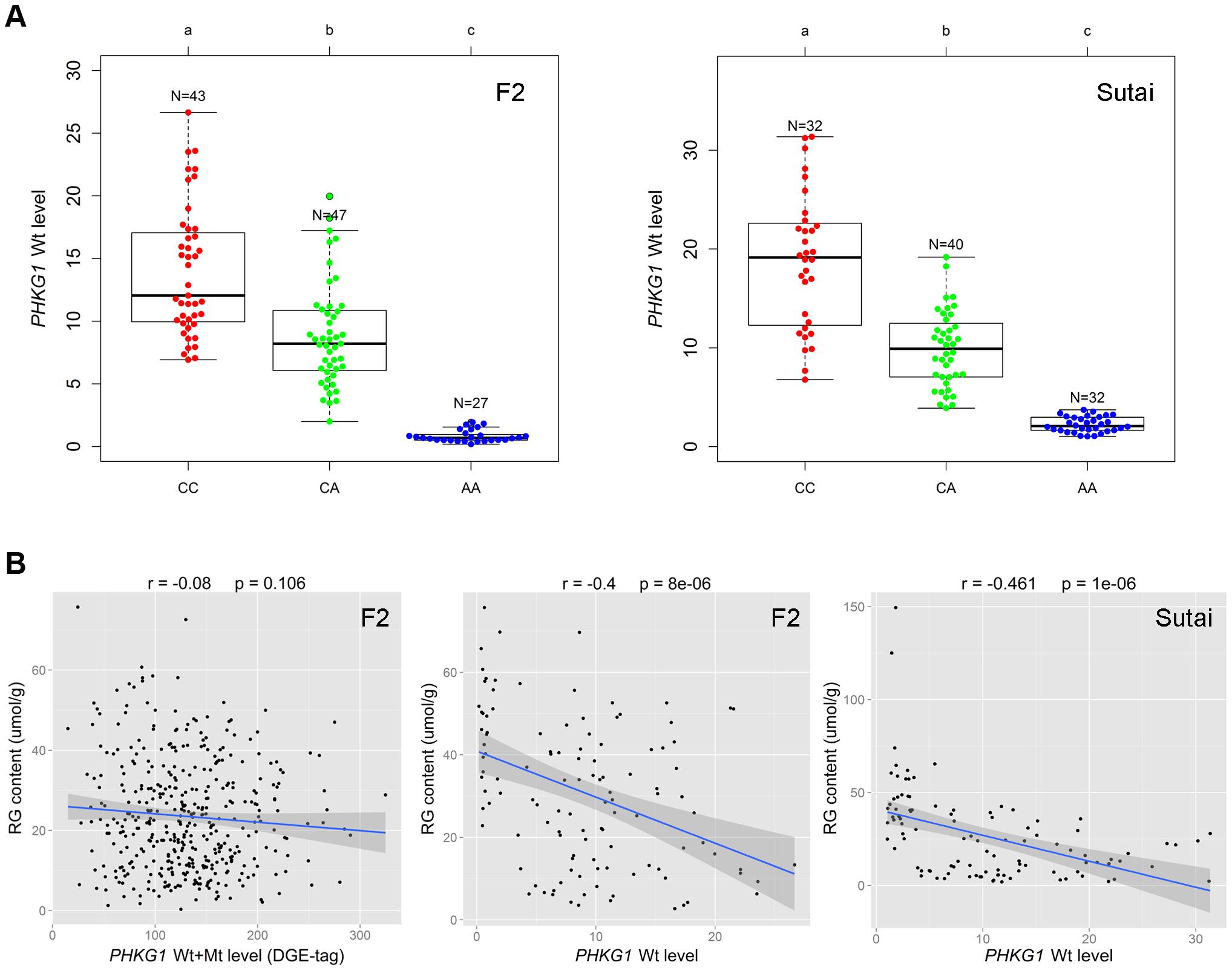 Relationship between the <i>PHKG1</i> transcript level and residual glycogen content.