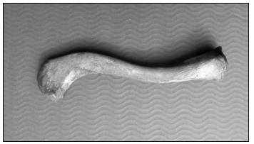Fotografie pravé klíční kosti dospělého člověka