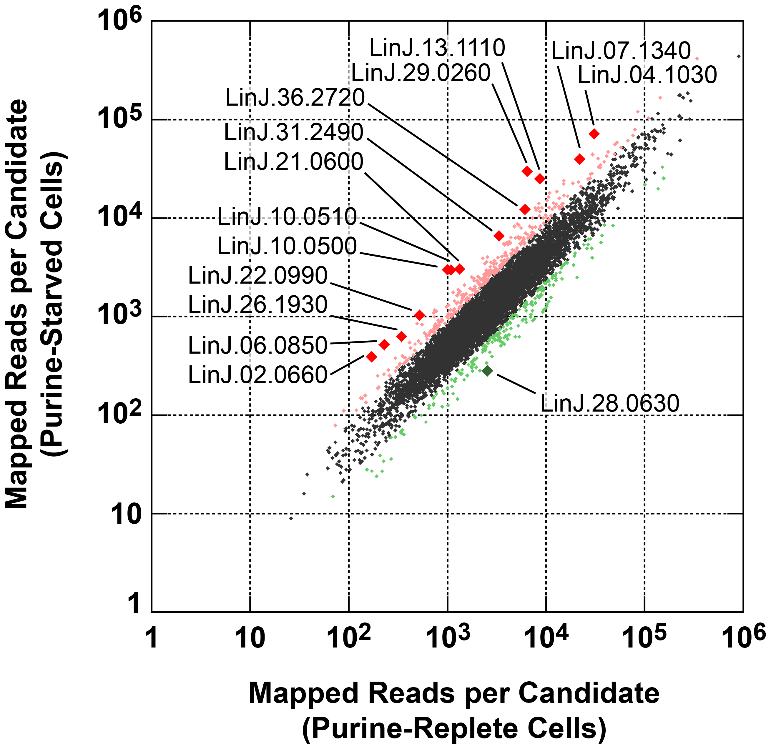 Scatter plot of SL RNA-Seq data comparing mRNA abundance between purine-replete and purine-starved cells.