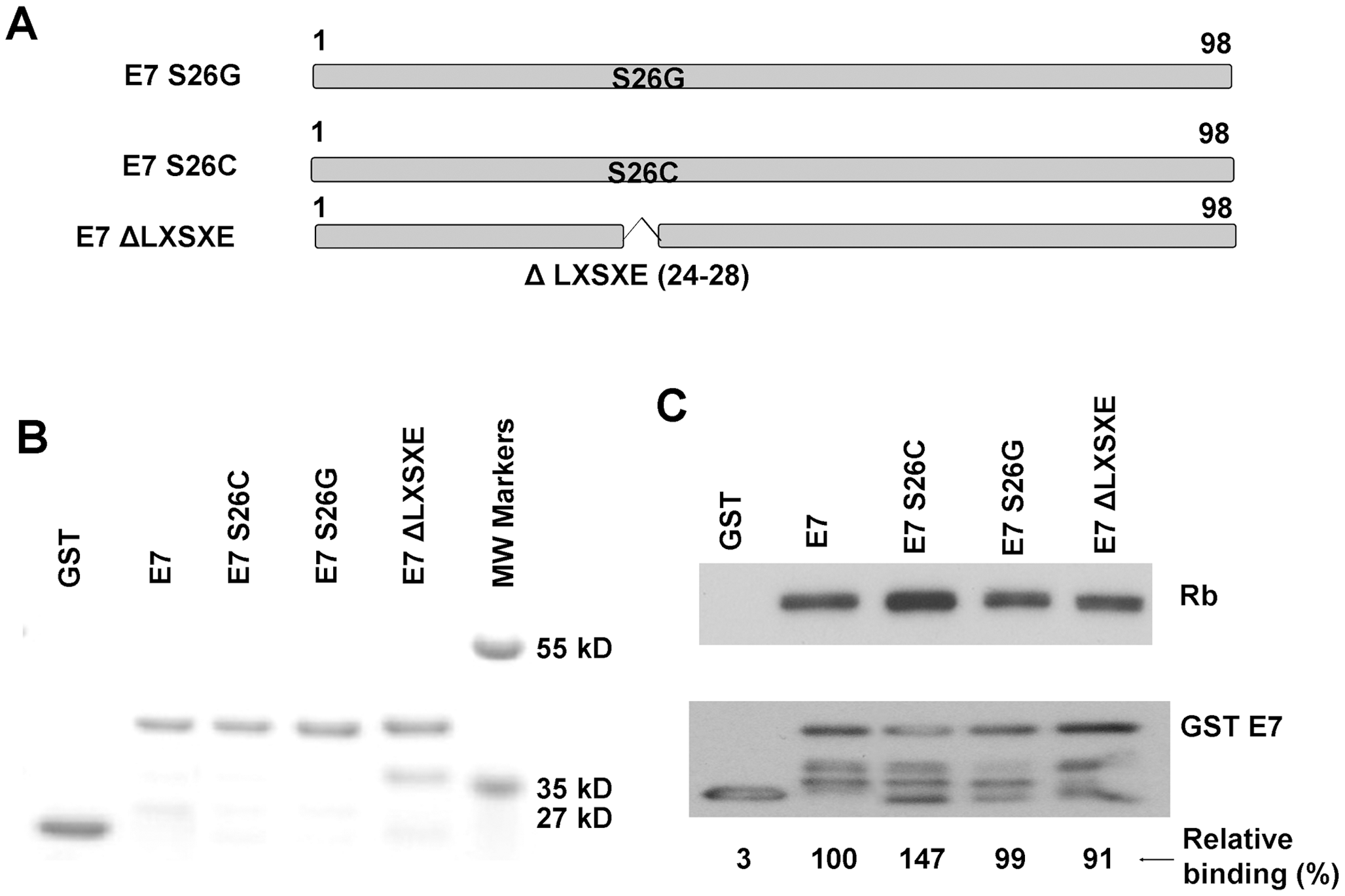 The canine E7 LXSXE motif is not required for pRb binding.