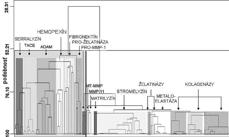 Dendogram stromovitých klastrov proteínov metaloproteáz. Hodnoty sekvencie a podobnosti sú na horizontálnych, resp. na vertikálnych osiach <sup>11)</sup>