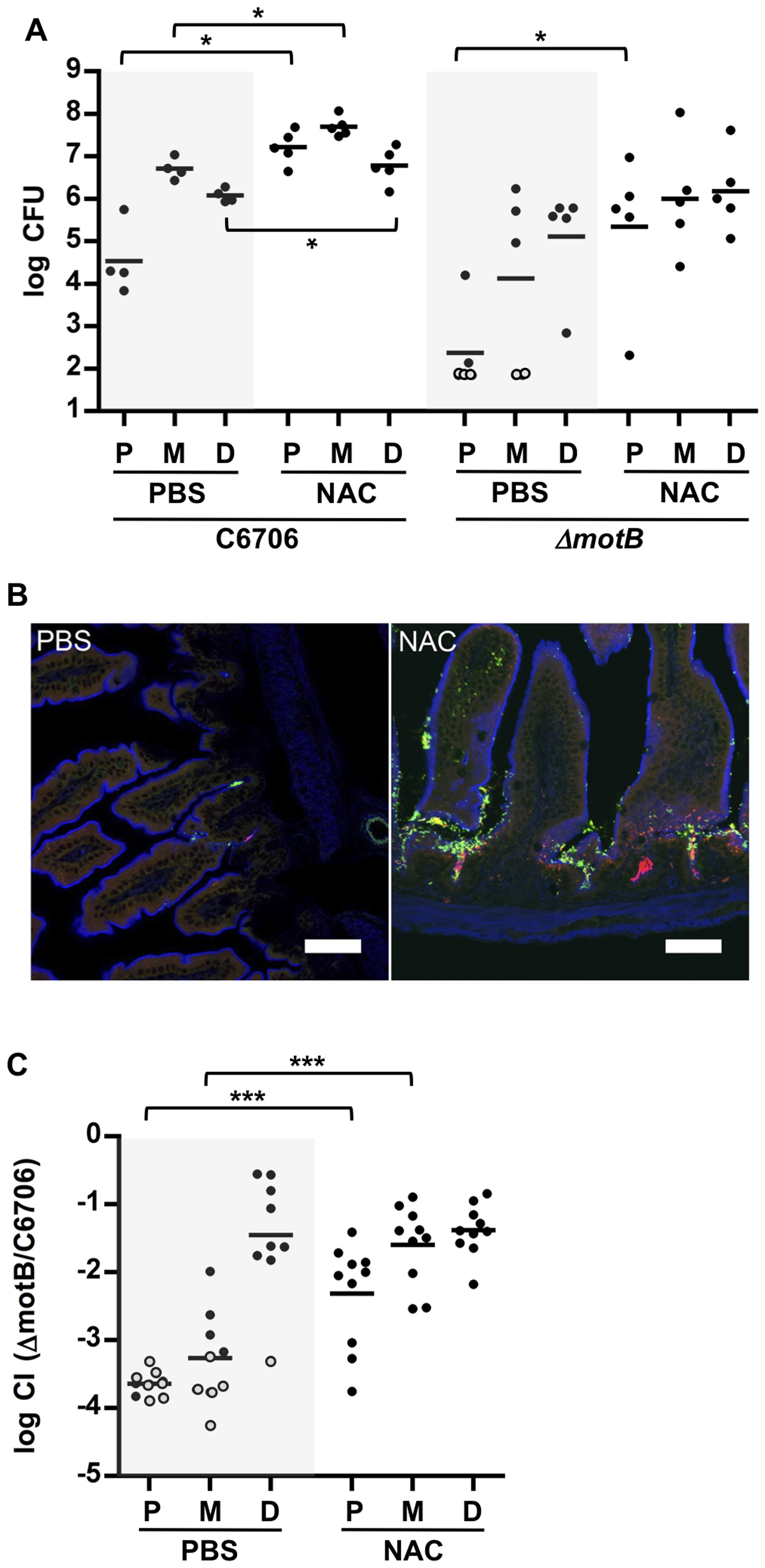 NAC pretreatment promotes <i>V. cholerae</i> intestinal colonization and reduces the requirement for motility.