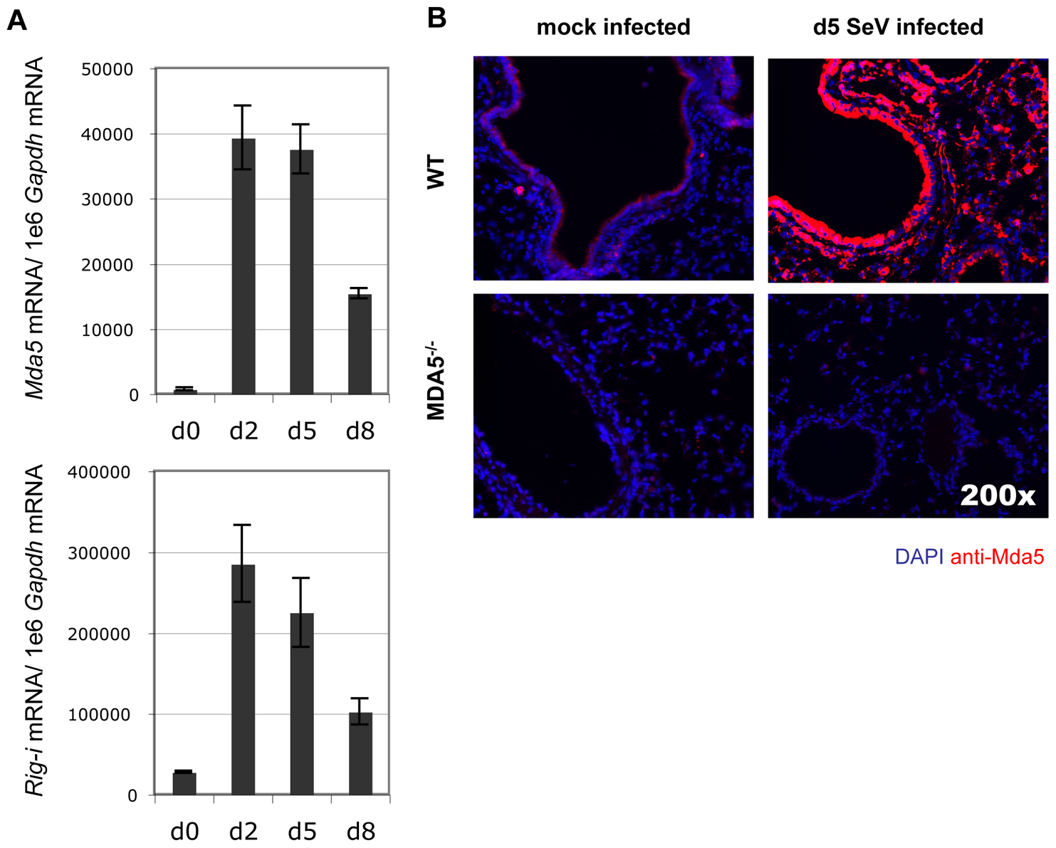 Infection with SeV results in induction of antiviral sensor expression.