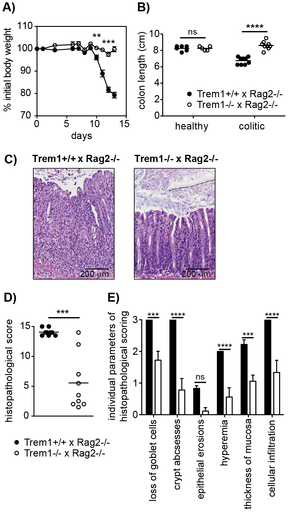 <i>Trem1<sup>−/−</sup> x Rag2<sup>−/−</sup></i> mice are protected from a CD4<sup>+</sup> T cell-induced colitis.