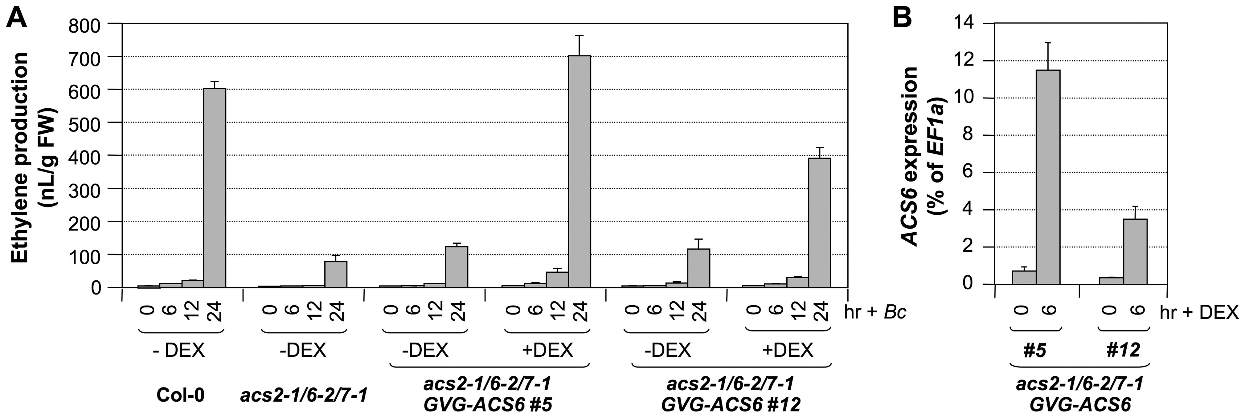 Conditional expression of the <i>ACS6</i> gene in the <i>acs2-1/acs6-2/acs7-1</i> mutant background restores ethylene induction triggered by <i>B. cinerea</i> infection.