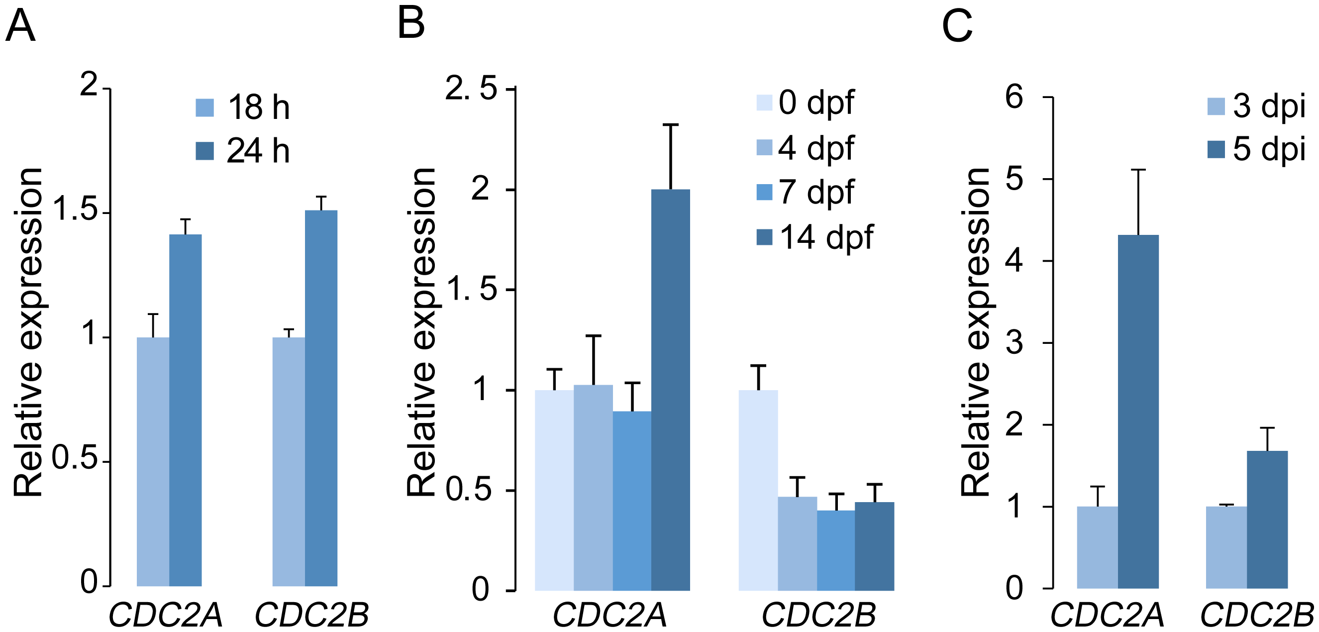 Expression levels of <i>CDC2A</i> and <i>CDC2B</i> assayed by qRT-PCR.