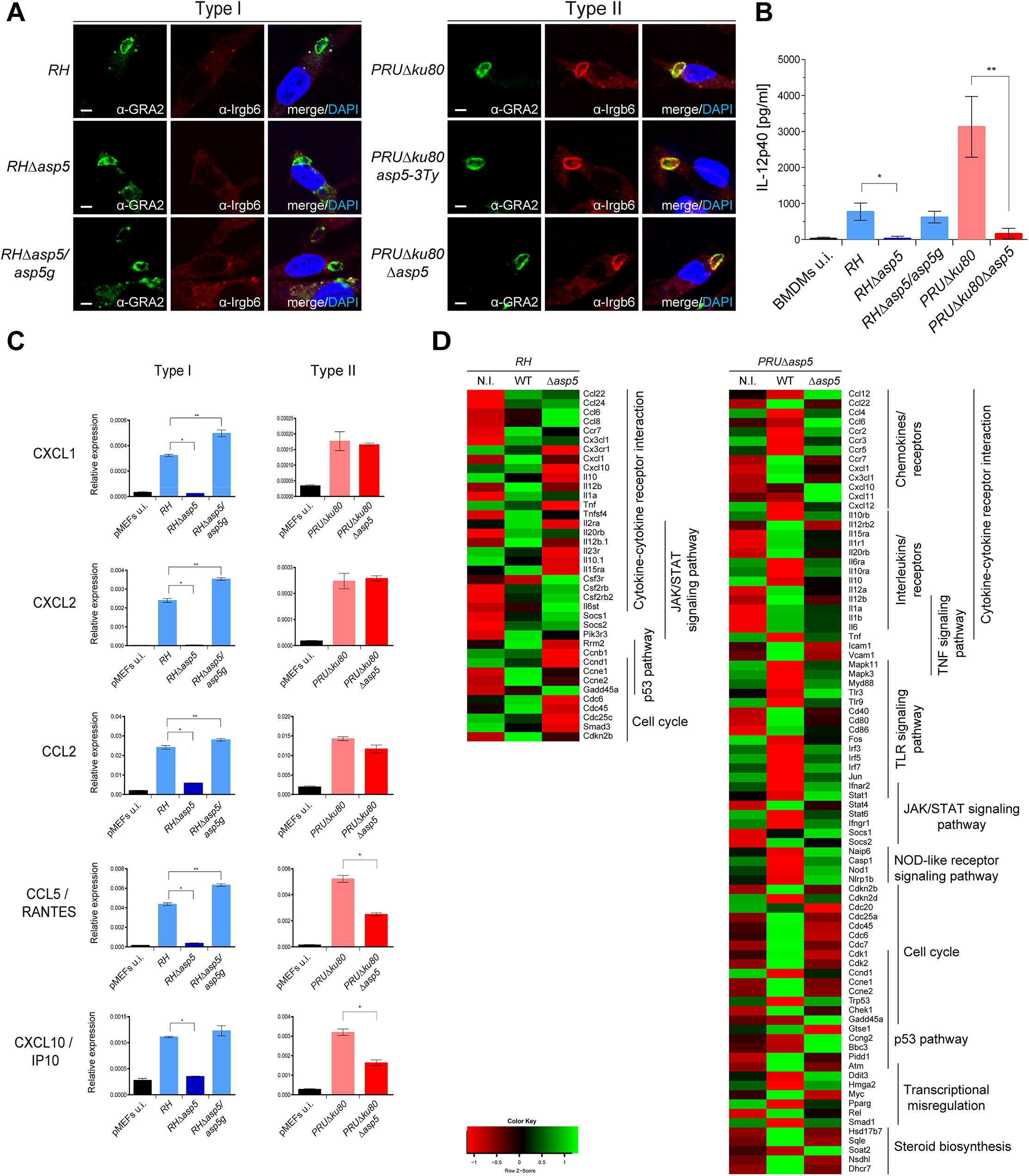 ASP5 modulates host innate immune responses.