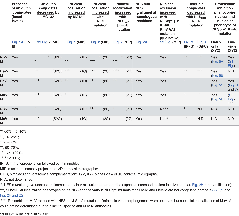 Summary of Paramyxovirinae matrix protein nuclear trafficking phenotypes.