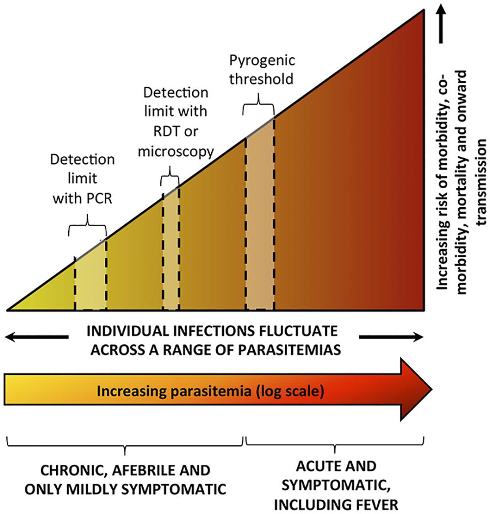 Spectrum of malaria infection.