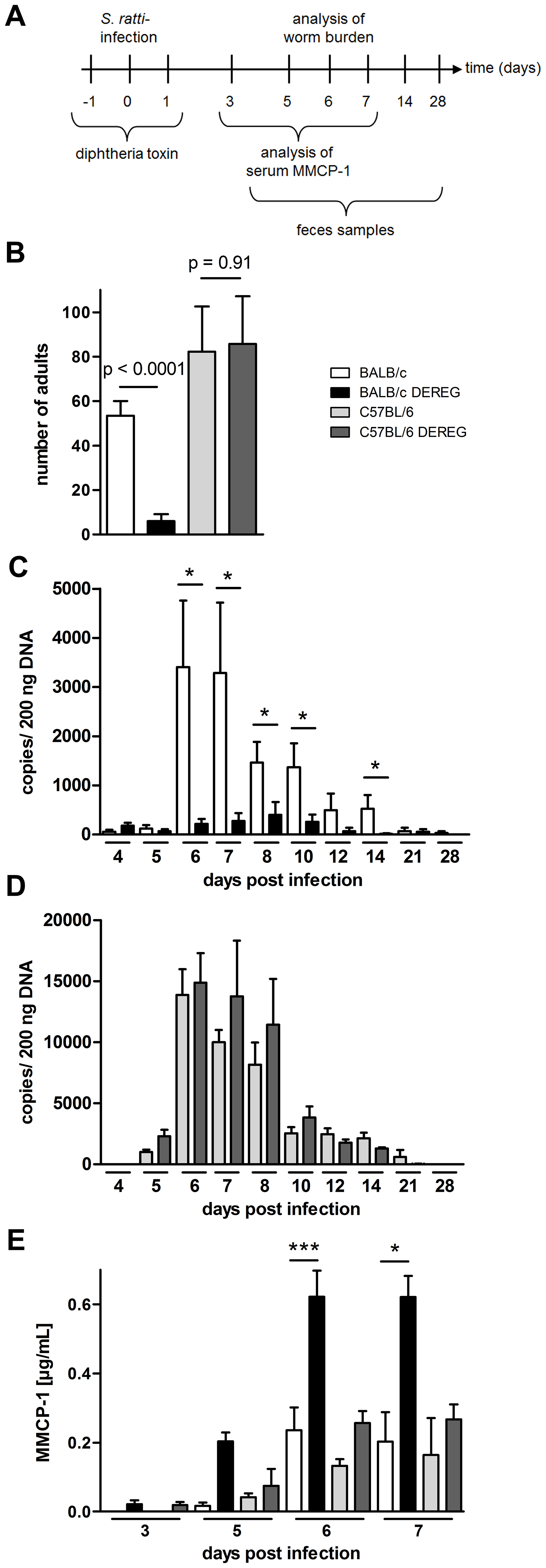 Increased resistance to S. <i>ratti</i> infection in Treg-depleted BALB/c DEREG but not in C57BL/6 DEREG mice.