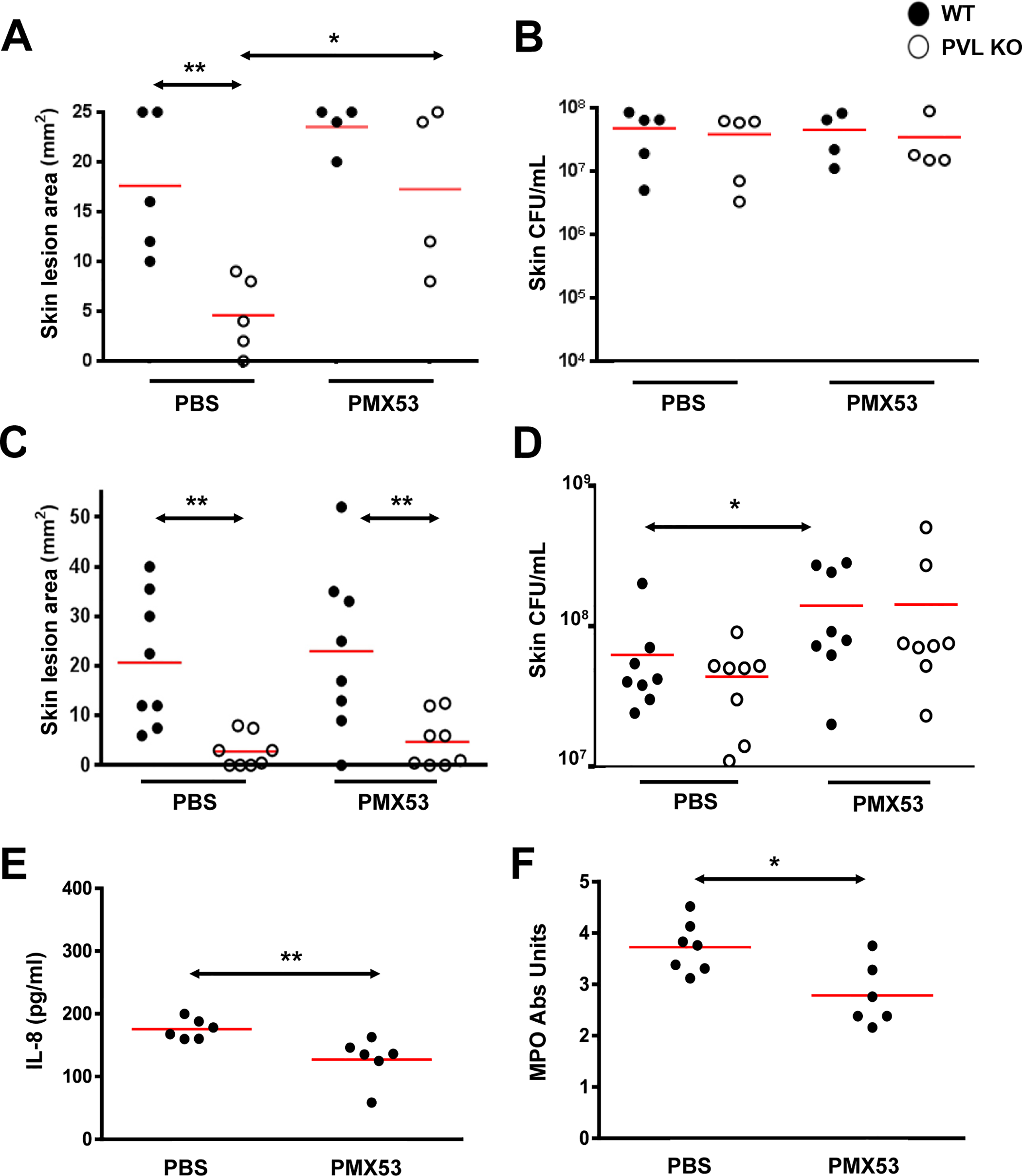 PMX53 reduces the size differences of lesions induced by WT and PVL<sup>-</sup> <i>S</i>. <i>aureus</i>.