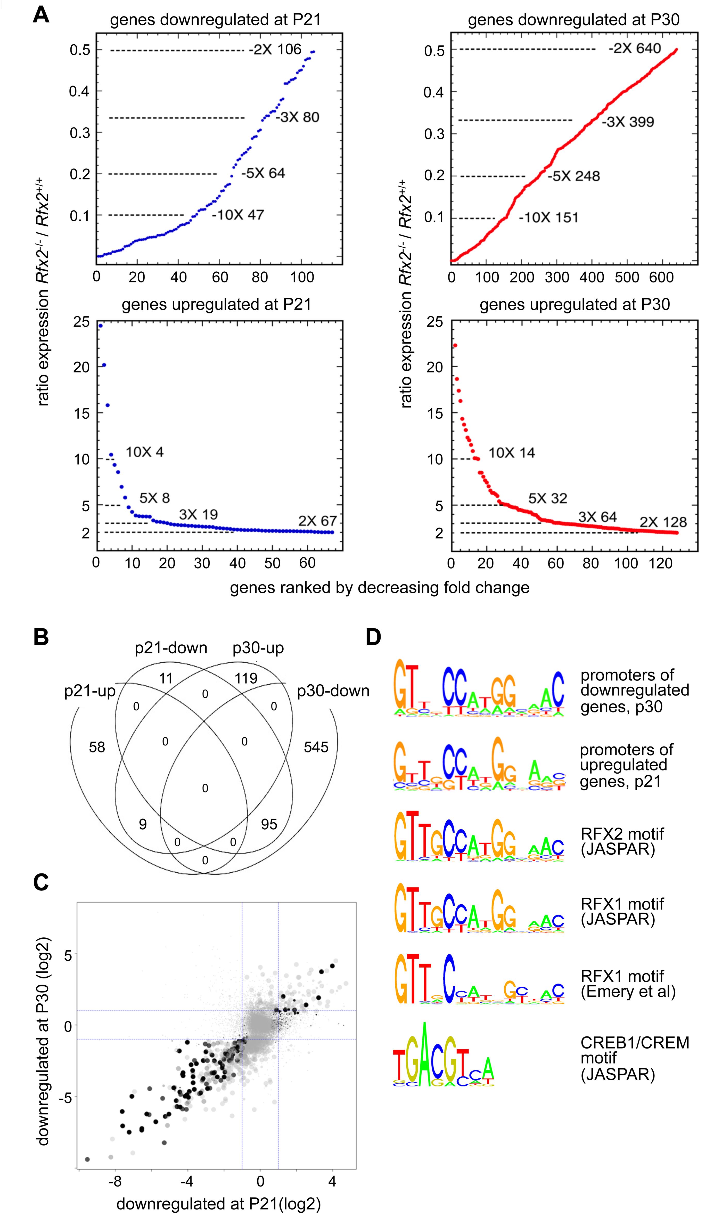 Perturbed gene expression in <i>Rfx2</i><sup>-/-</sup> testis.