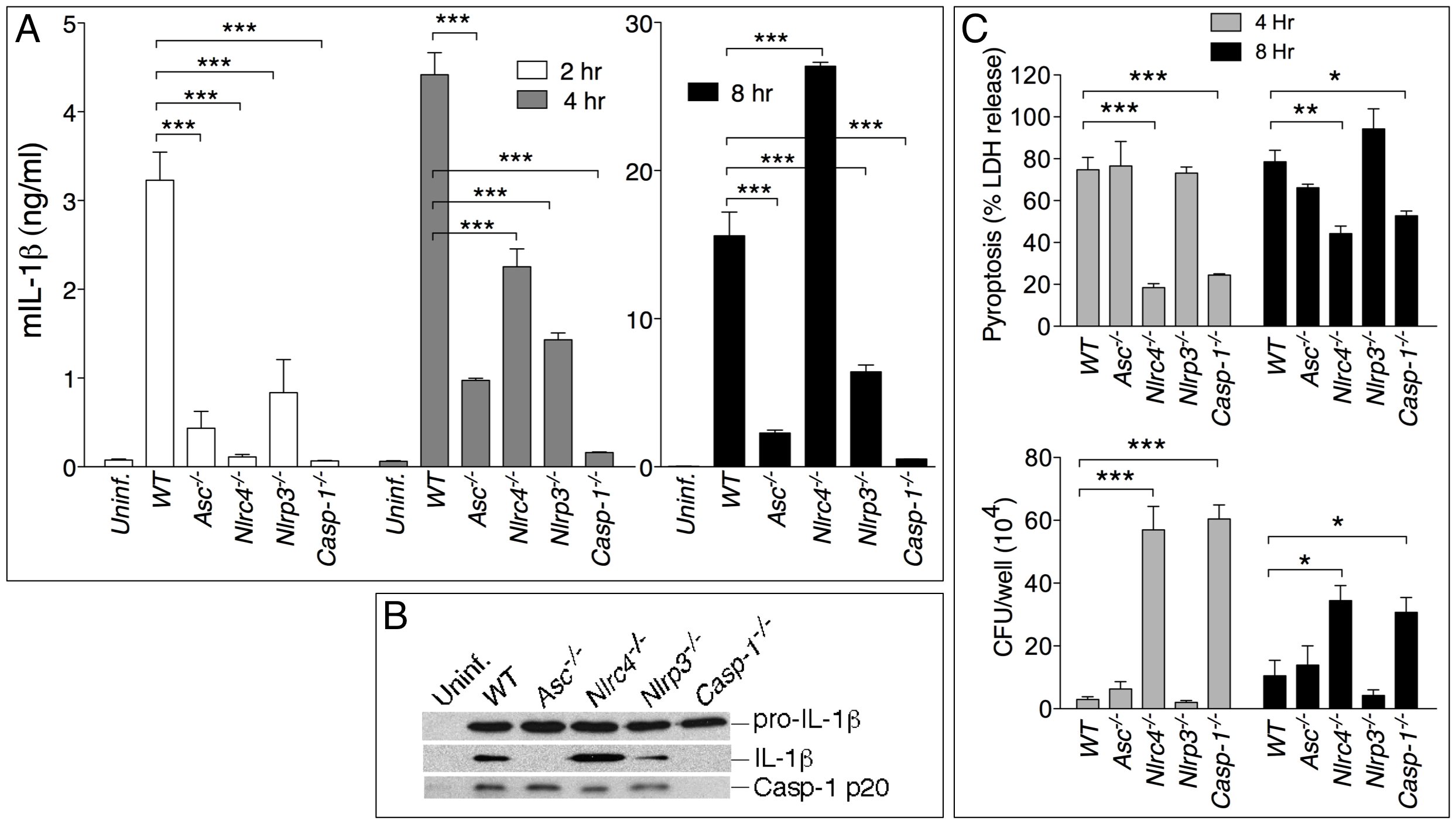 NLRP3 and NLRC4 differentially regulate production of IL-1β and pyroptosis.