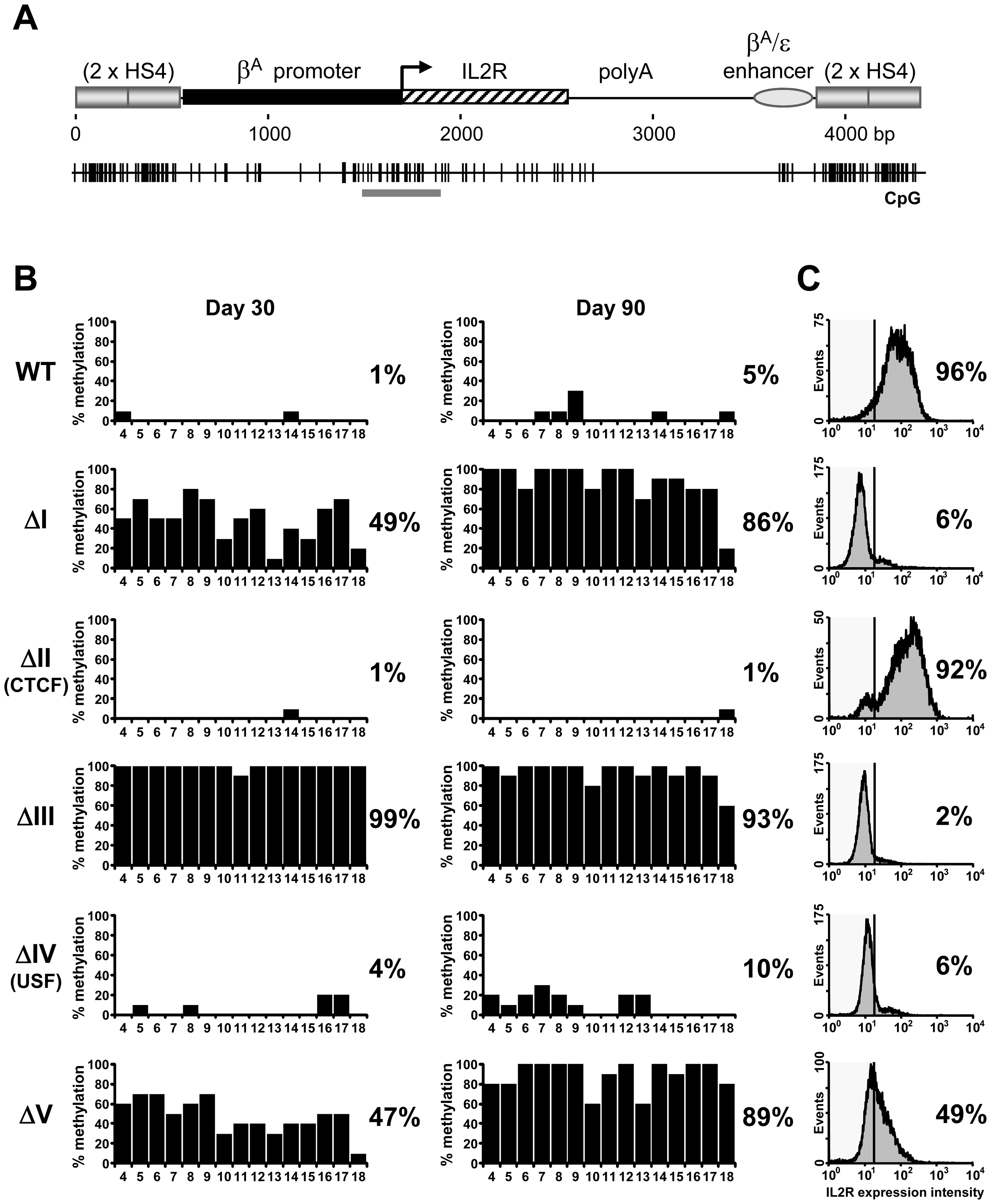Three footprinted sites in the HS4 barrier protect a promoter from DNA methylation.